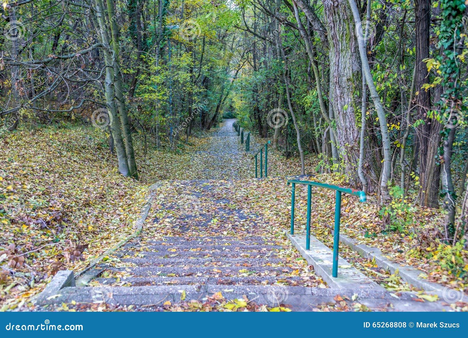 Escaleras concretas largas en el parque m s forrest en el for Escaleras largas