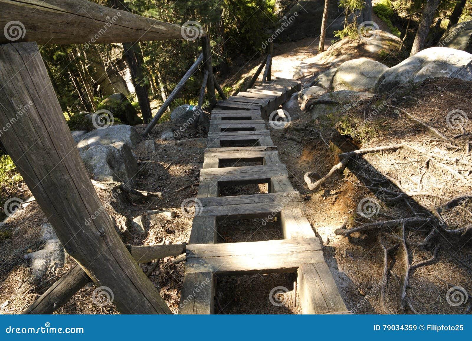 bosque escalera escaleras madera