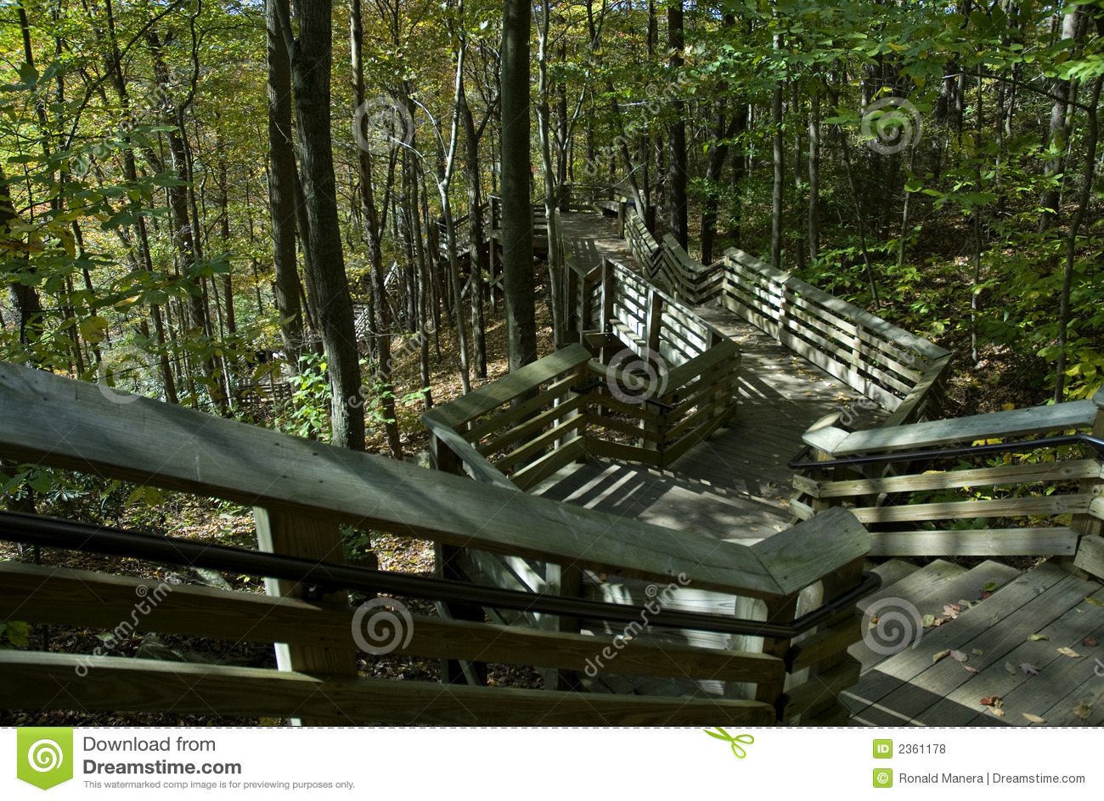 Escaleras del bosque