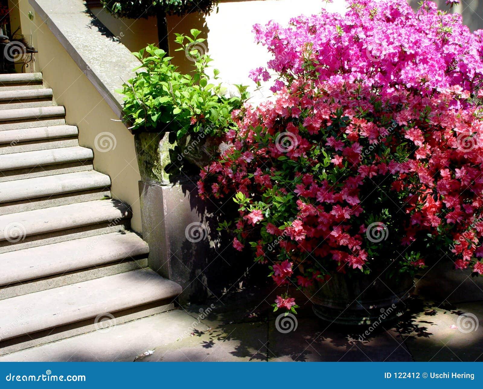 Escaleras del jard n fotograf a de archivo imagen 122412 - Escaleras jardin ...