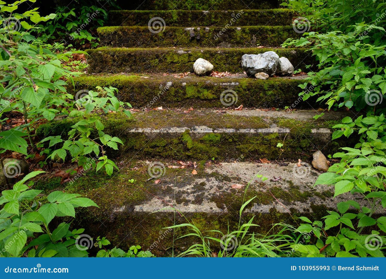 Escalier en pierre envahi avec de la mousse et les plantes vertes
