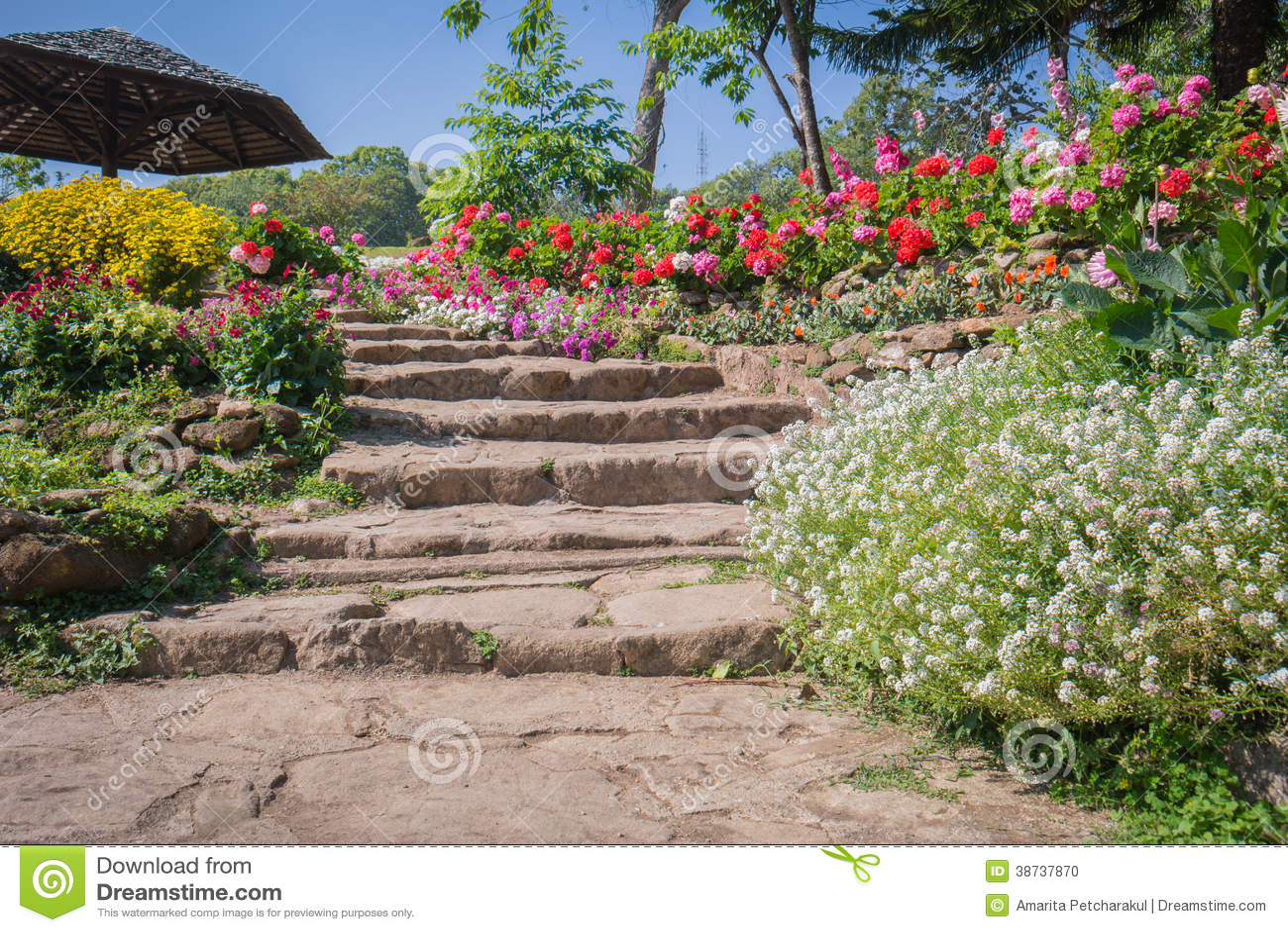 Escalier Naturel Dans Le Jardin Photo stock - Image du nature ...
