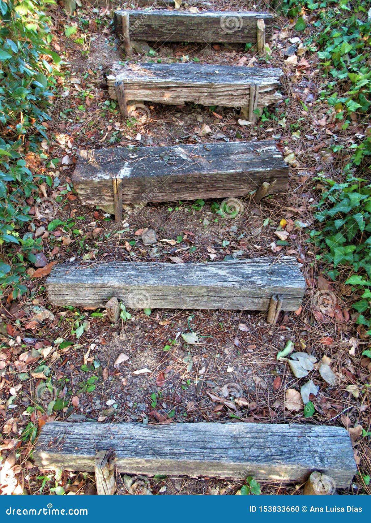 Escaliers de Wodden dans une forêt