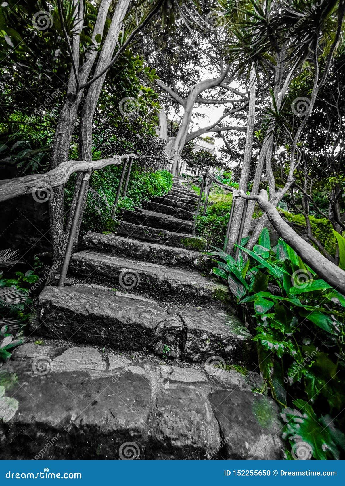 Escaliers filtrés de verdure