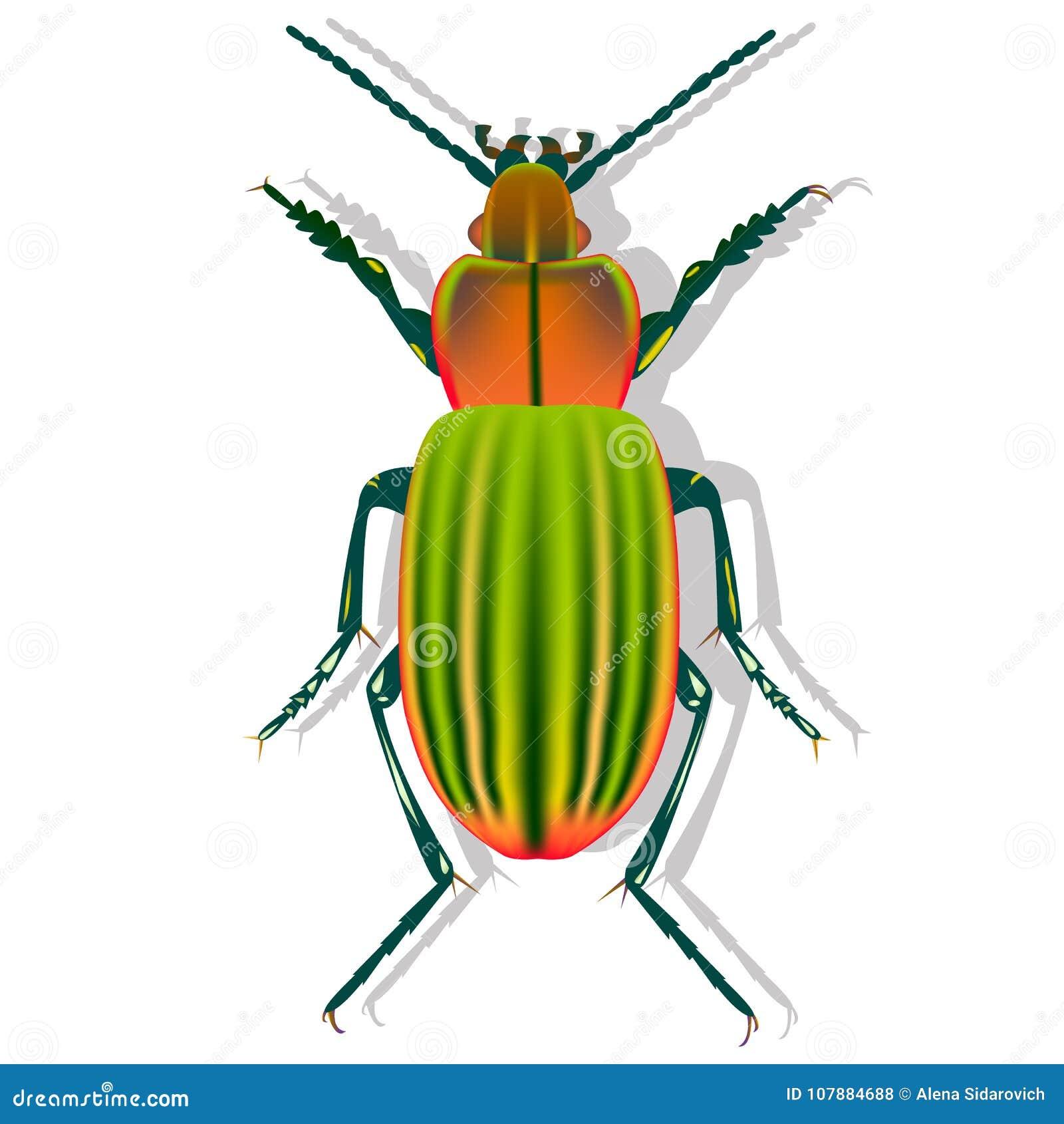 Escarabajo de tierra con la sombra en el fondo blanco, escarabajo de la tierra, gra
