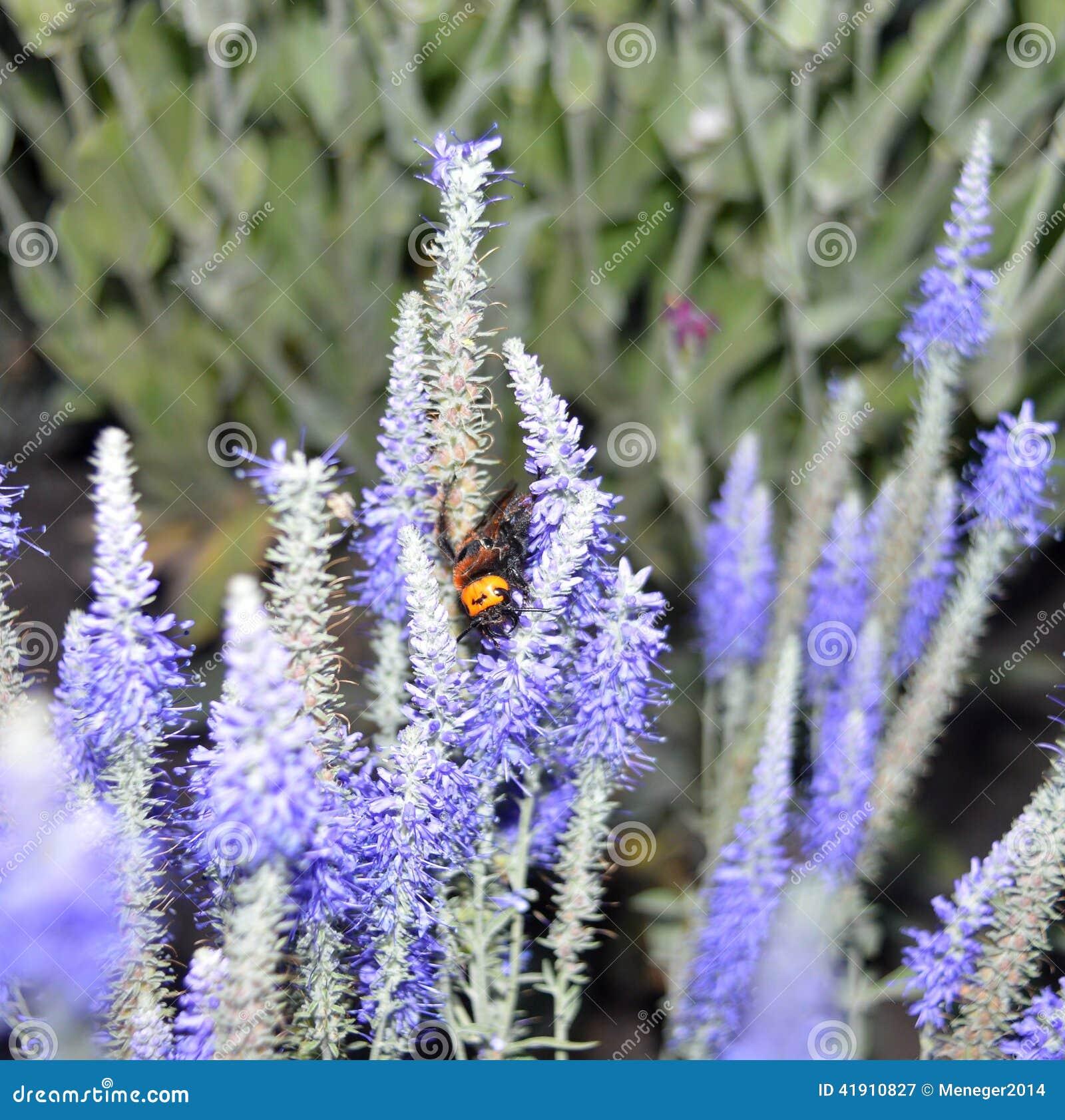 Escarabajo en los colores, vigilante durmiente, naturaleza hermosa, habitante interesante, hora de descansar, verano