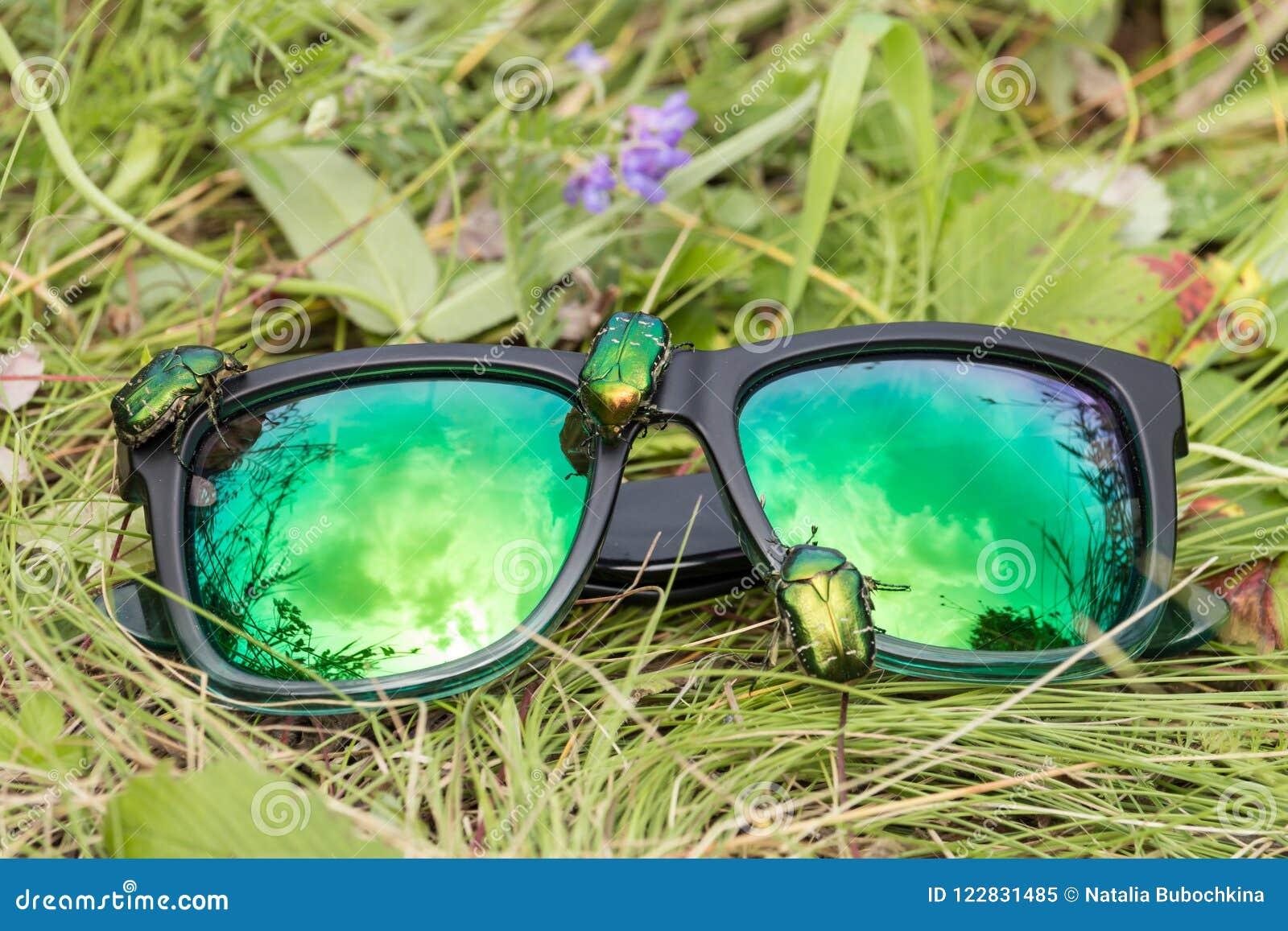 df68c8b77a Escarabajos verdes del abejorro color de rosa en las gafas de sol del espejo  que mienten en la hierba verde del prado del verano con los wildflowers ...