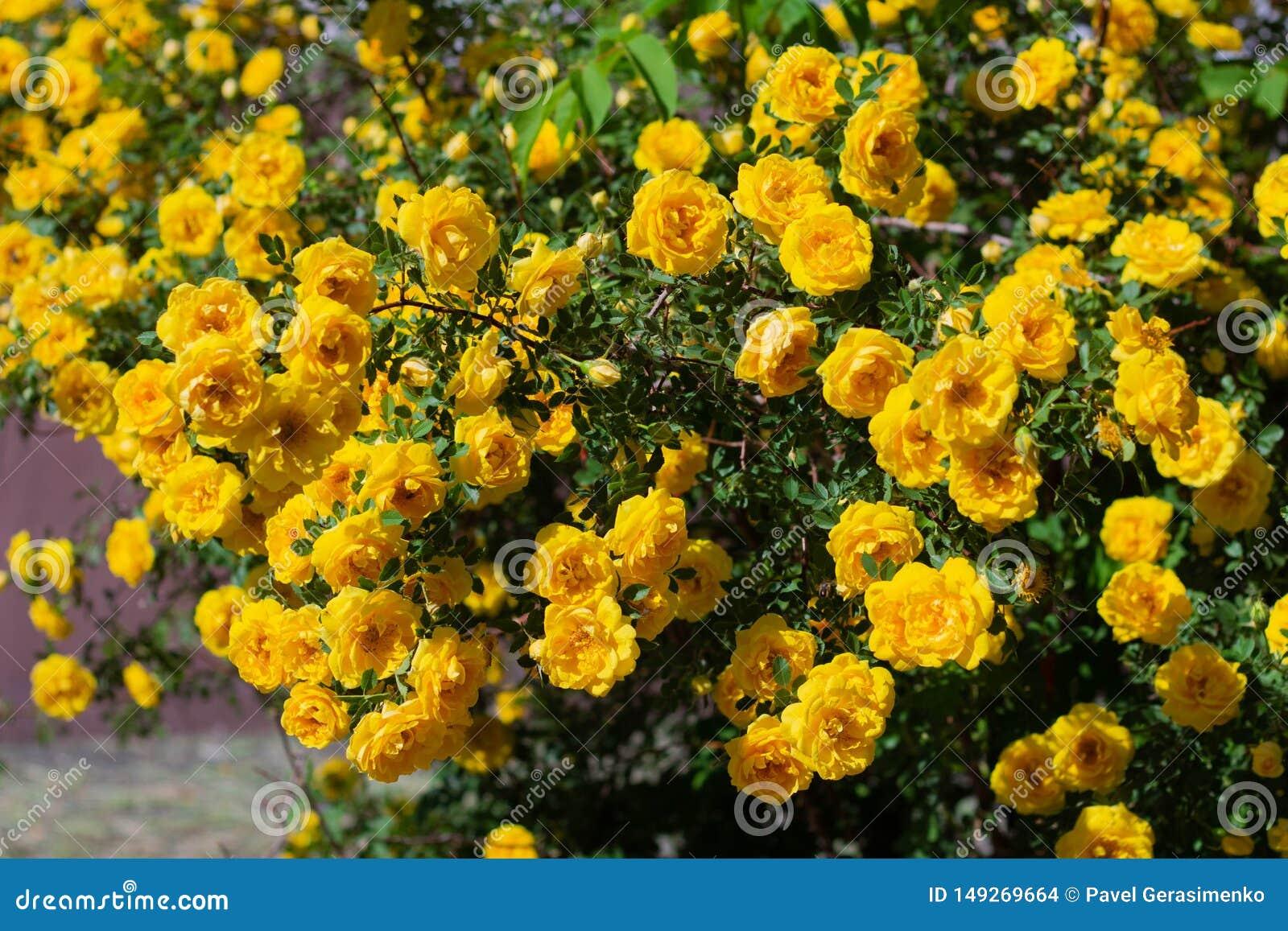 Odoukey Colgando de Flores en Maceta de Flores del Amarillo de Pared florero de cer/ámica Decorativa de jard/ín Tiesto