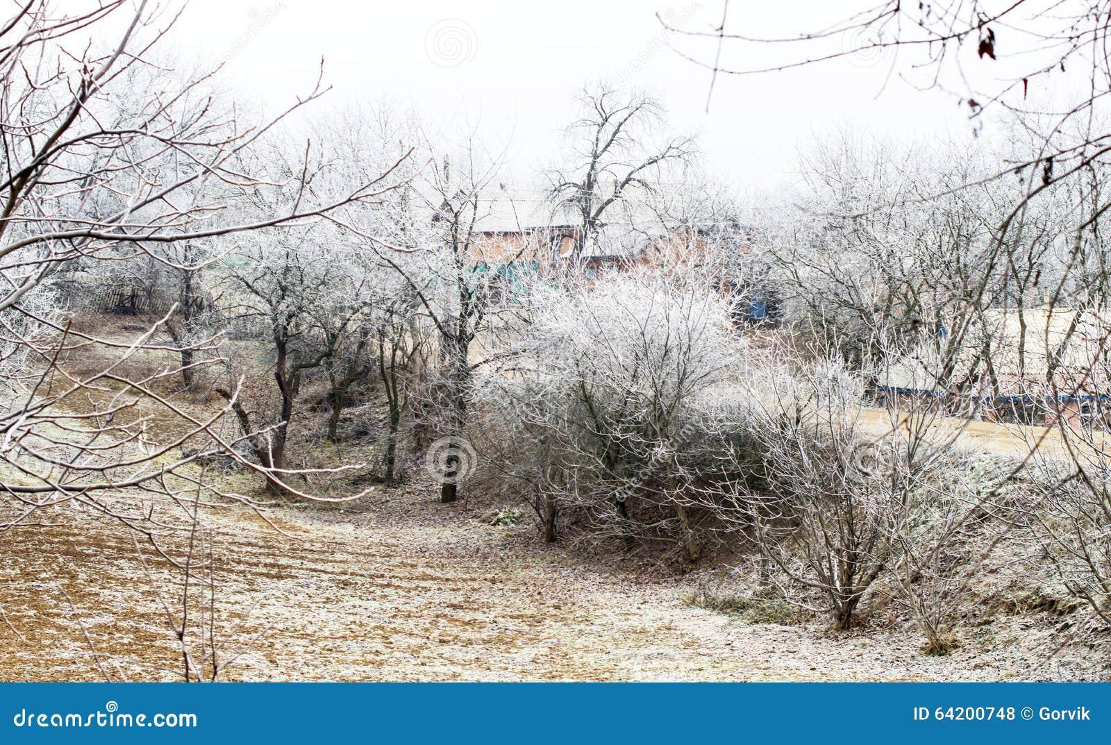 Escarcha blanca en árboles en el campo