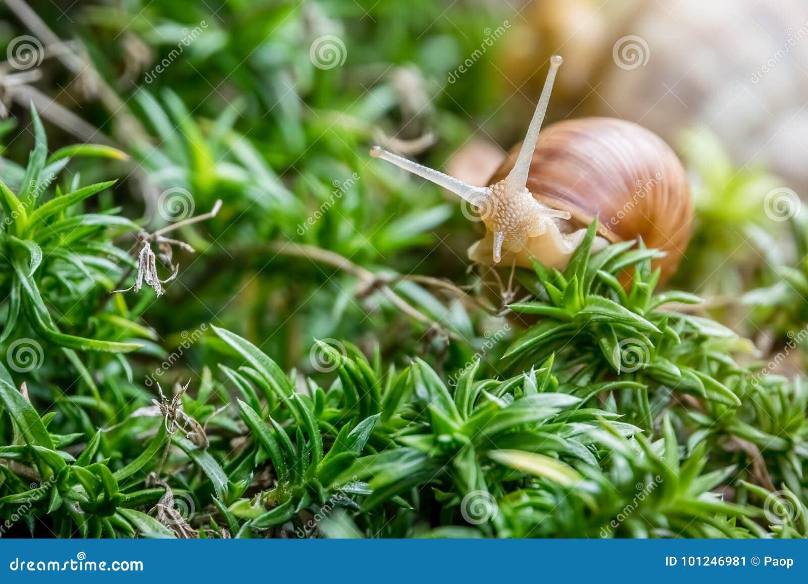 Escargot dans la broussaille