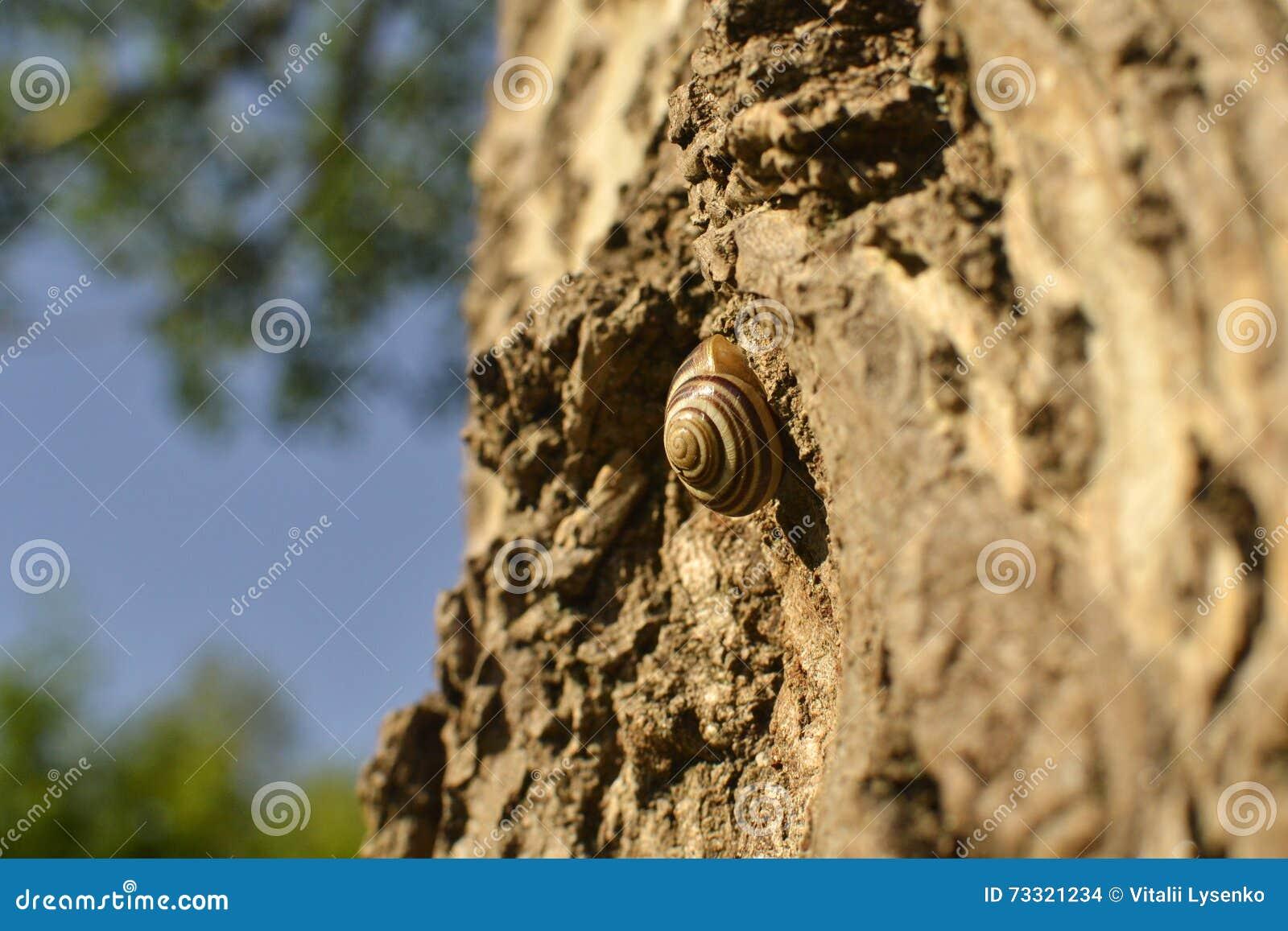 Escargot rampant sur l écorce d un arbre