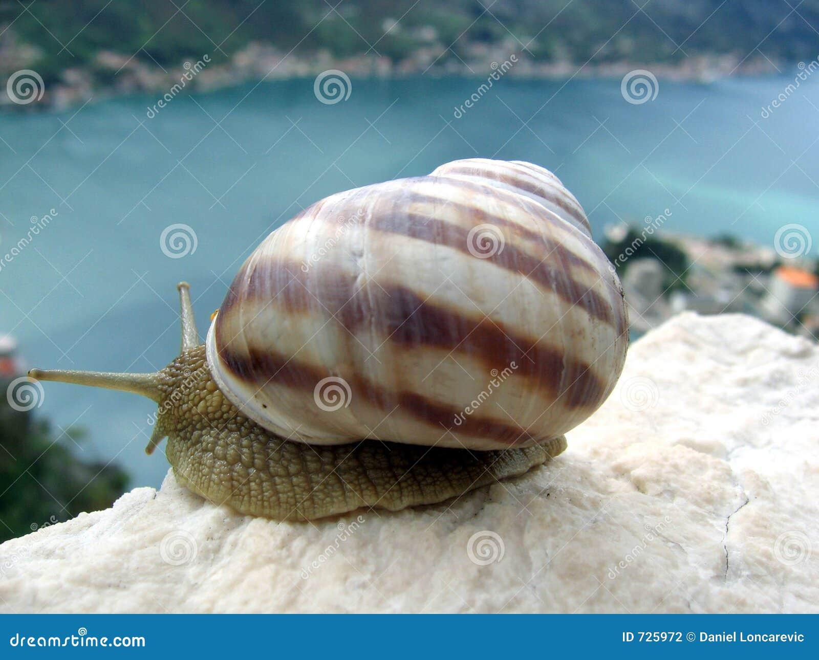Escargot regardant le compartiment