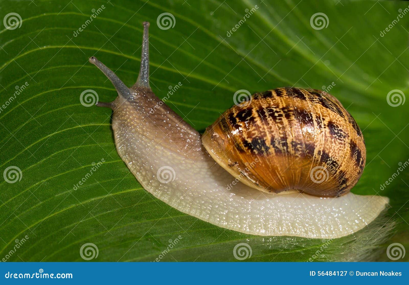 Escargot sur une lame verte