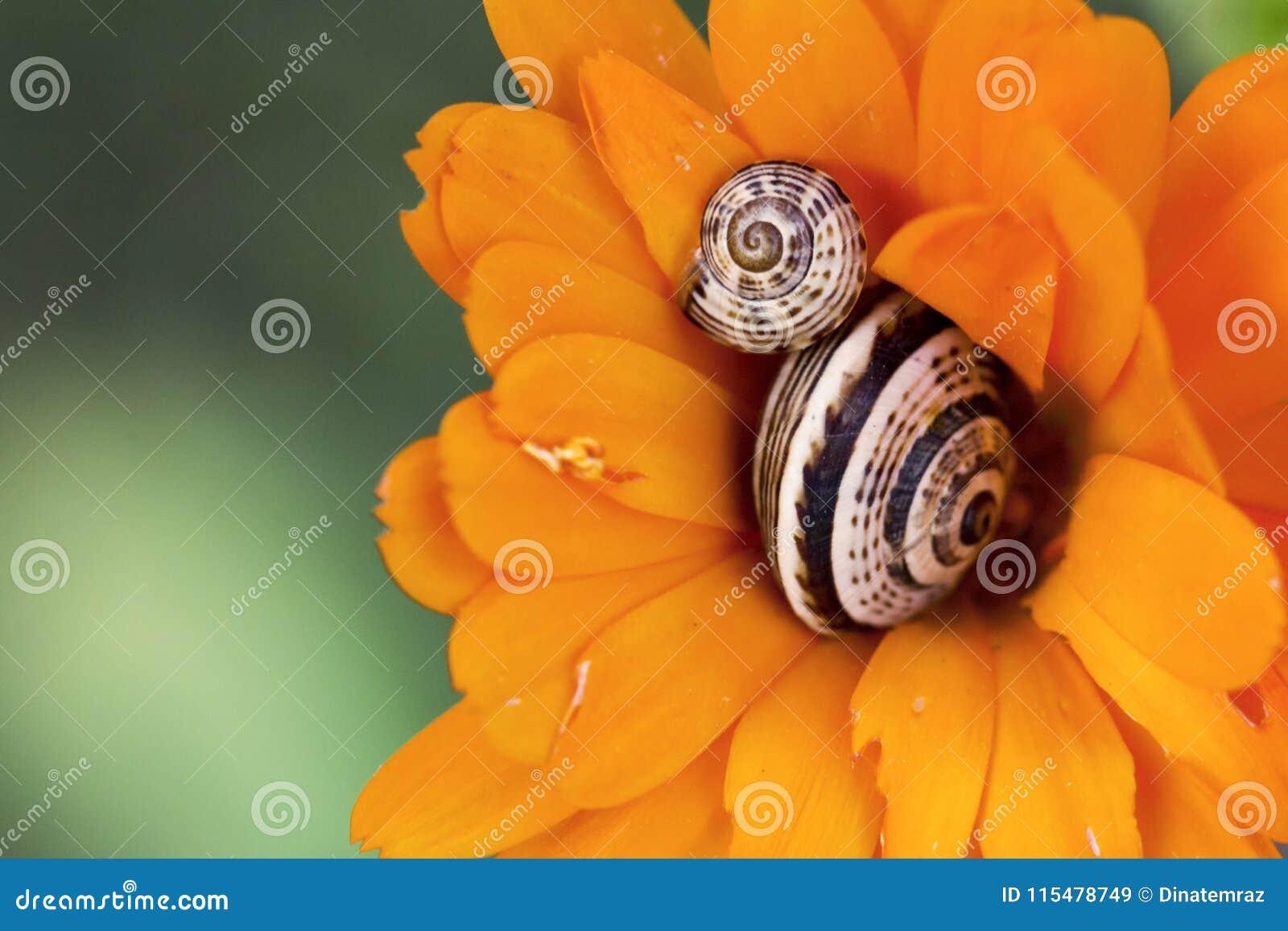 Escargots en fleur