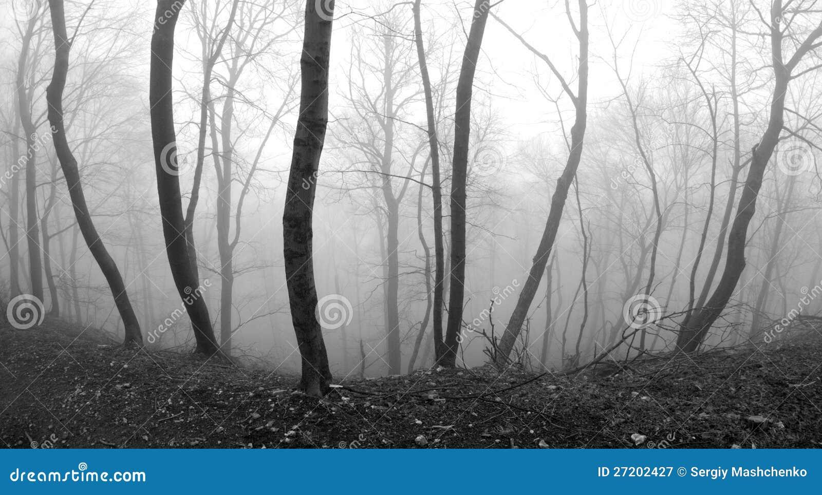 Escarpment nevoento