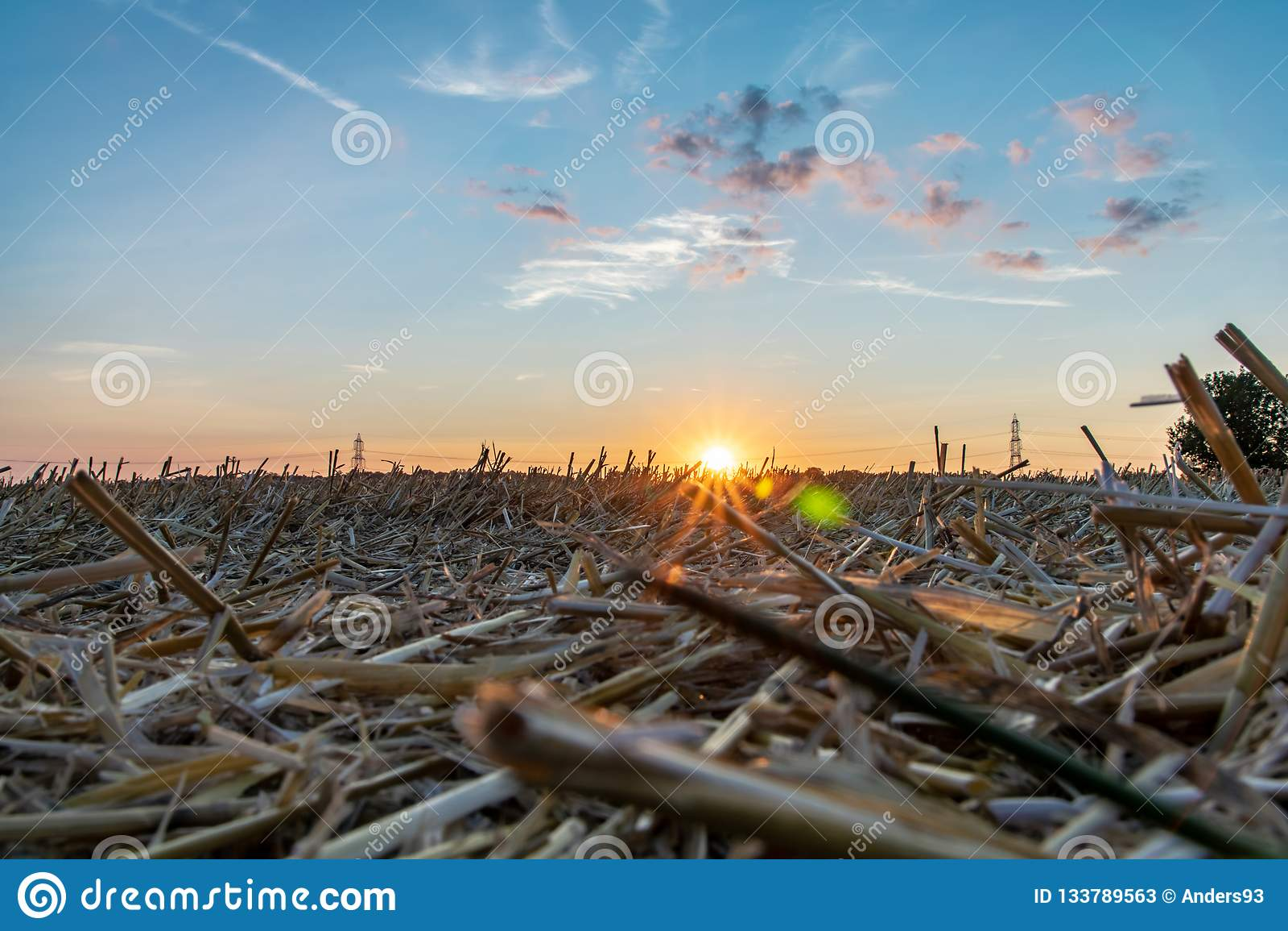 Escena del campo de campos y de pilones de la electricidad contra el cielo de oro de la puesta del sol