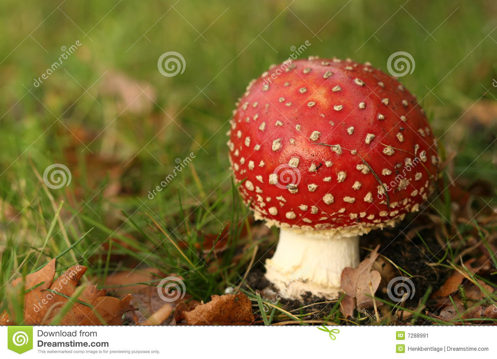 Escena del otoño: Toadstool