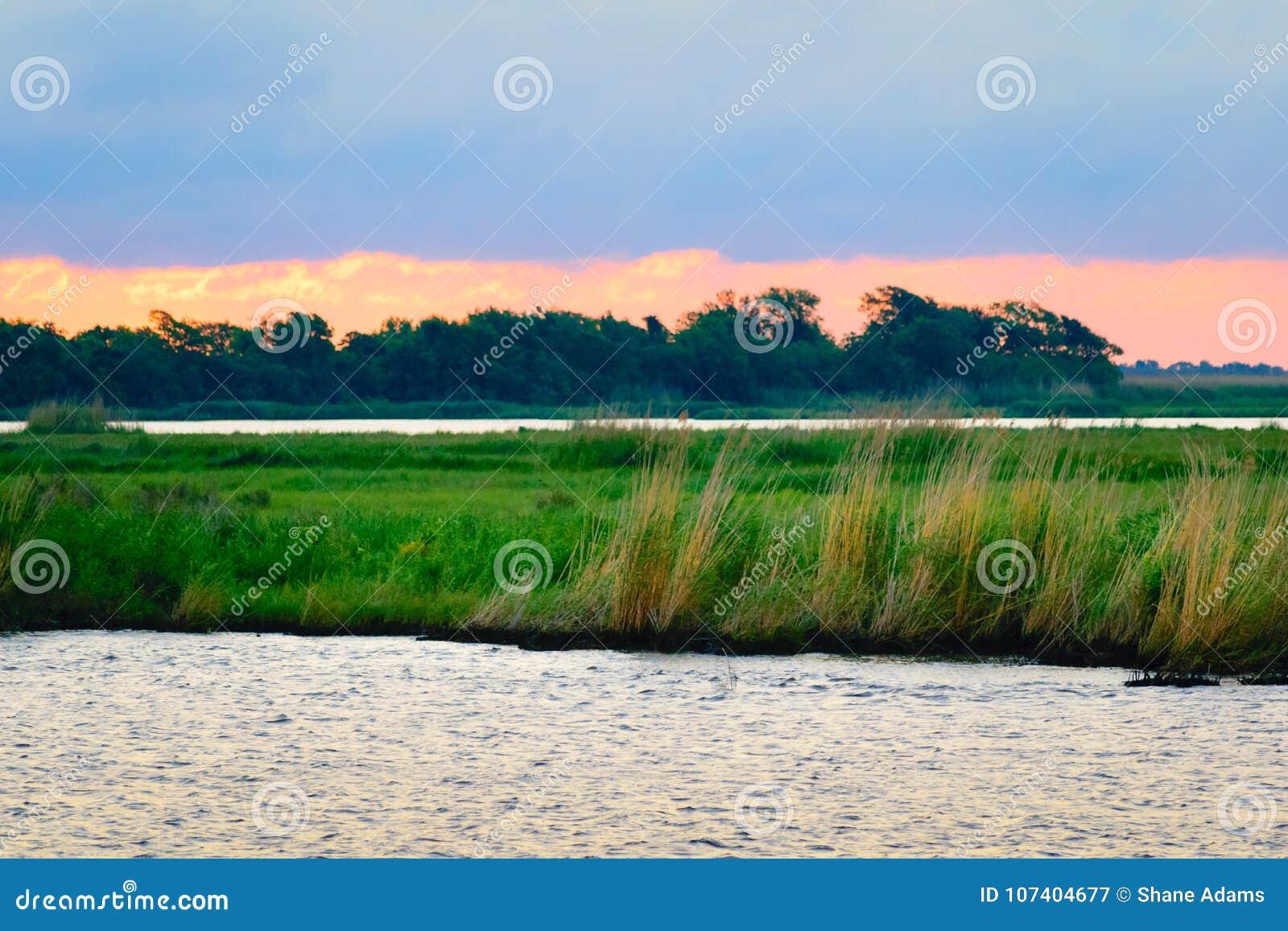 Escena del pantano de Luisiana