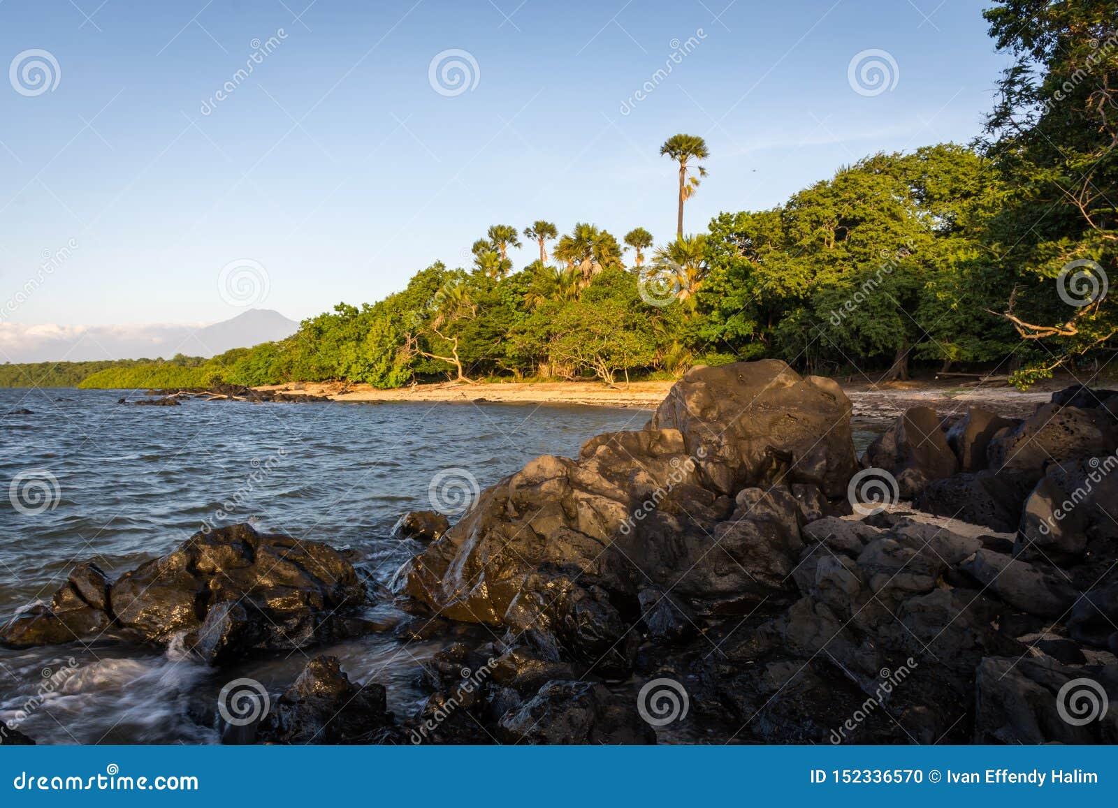 sale retailer big sale release date: Escena Hermosa De La Playa De Bama, Baluran El Parque ...
