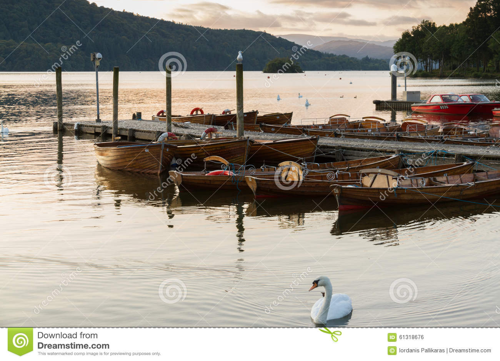 Escena romántica de la oscuridad de un cisne mudo hermoso y de barcos amarrados en el lago Windermere