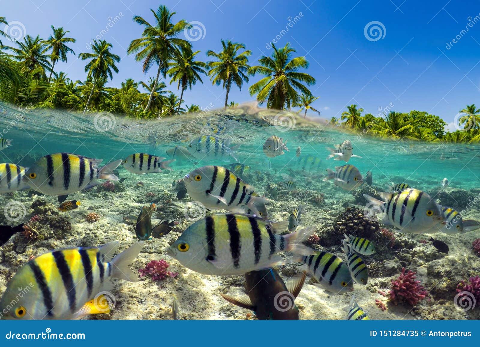 Escena subacu?tica con el fil?n y los pescados tropicales