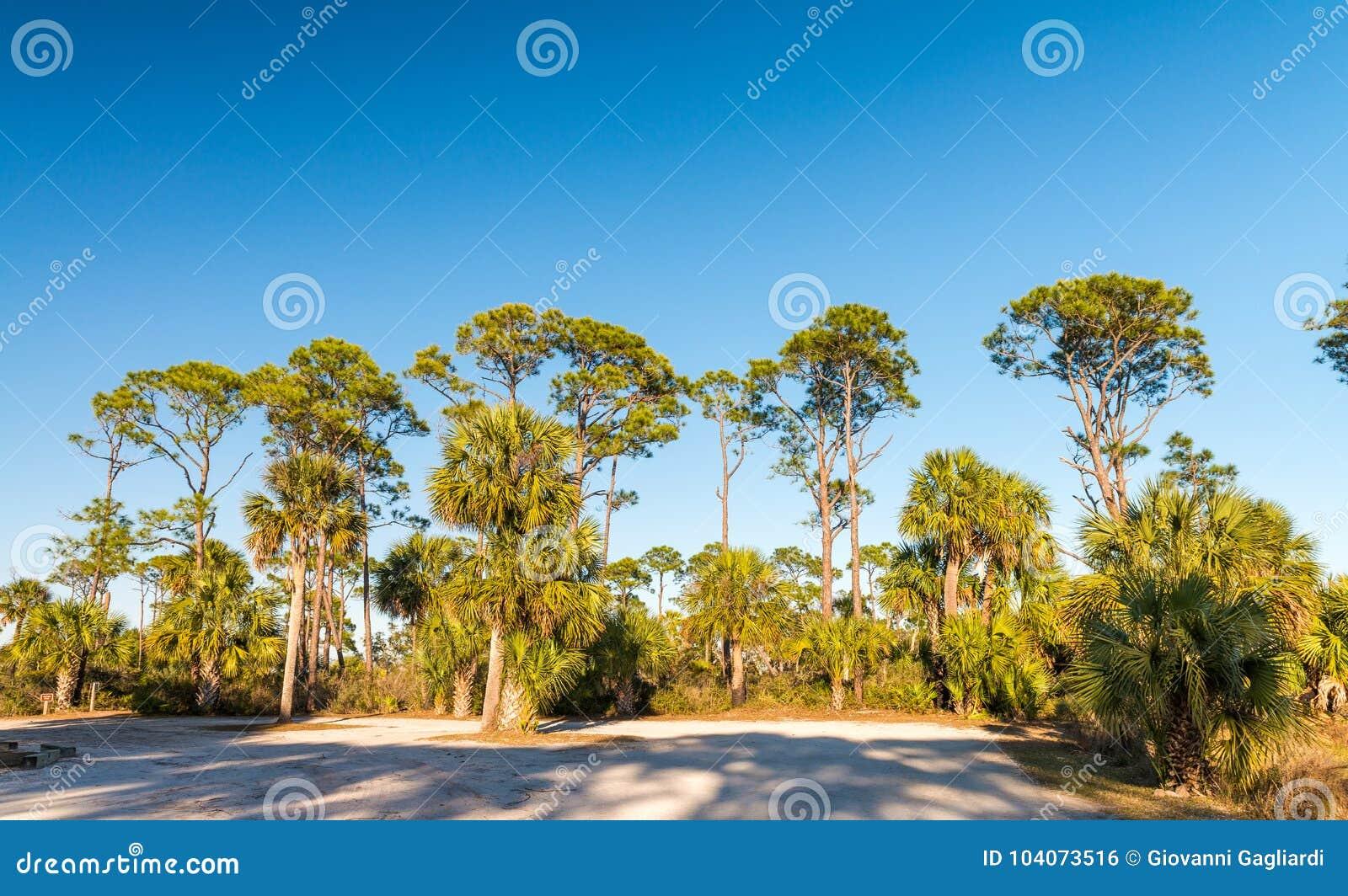 Escenario del Caribe hermoso Sombras de la madera de pino y del árbol en la oscuridad