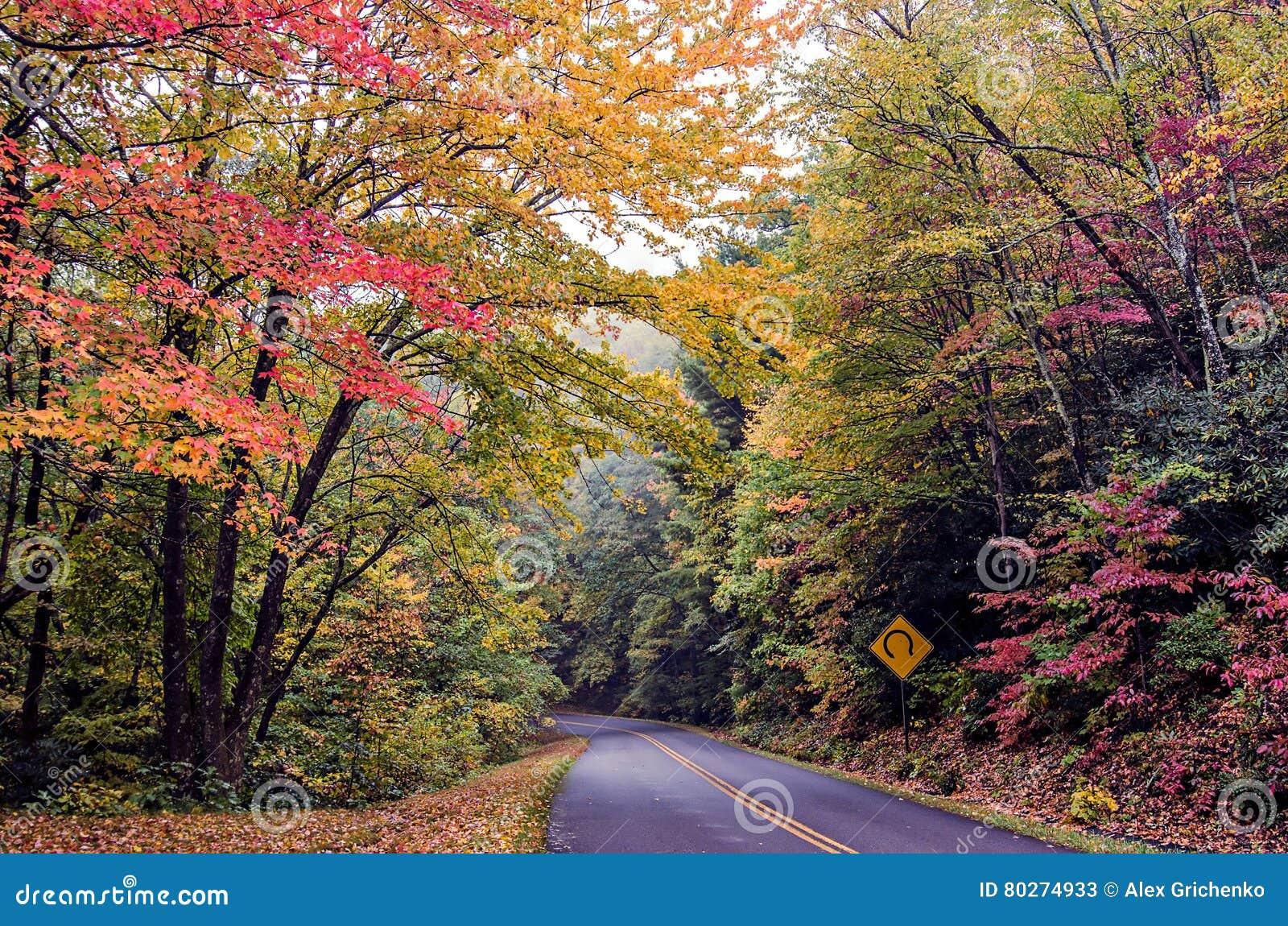 Escenas de la naturaleza en las Grandes Montañas Humeantes azules de la ruta verde del canto
