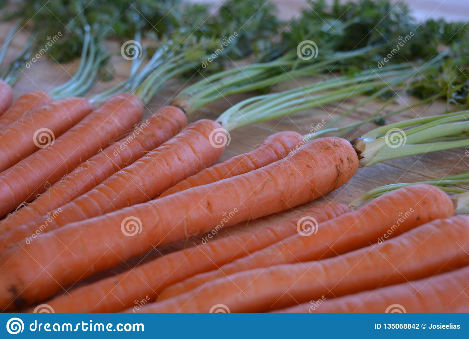 Escogio Recientemente Zanahorias Organicas Con Los Tops De La Zanahoria Foto De Archivo Imagen De Escogio Recientemente 135068842 El jugo de zanahoria es una bebida deliciosa y nutritiva rica en betacaroteno, vitamina a, b, c, d, e, k y minerales como el calcio, fósforo y potasio. dreamstime