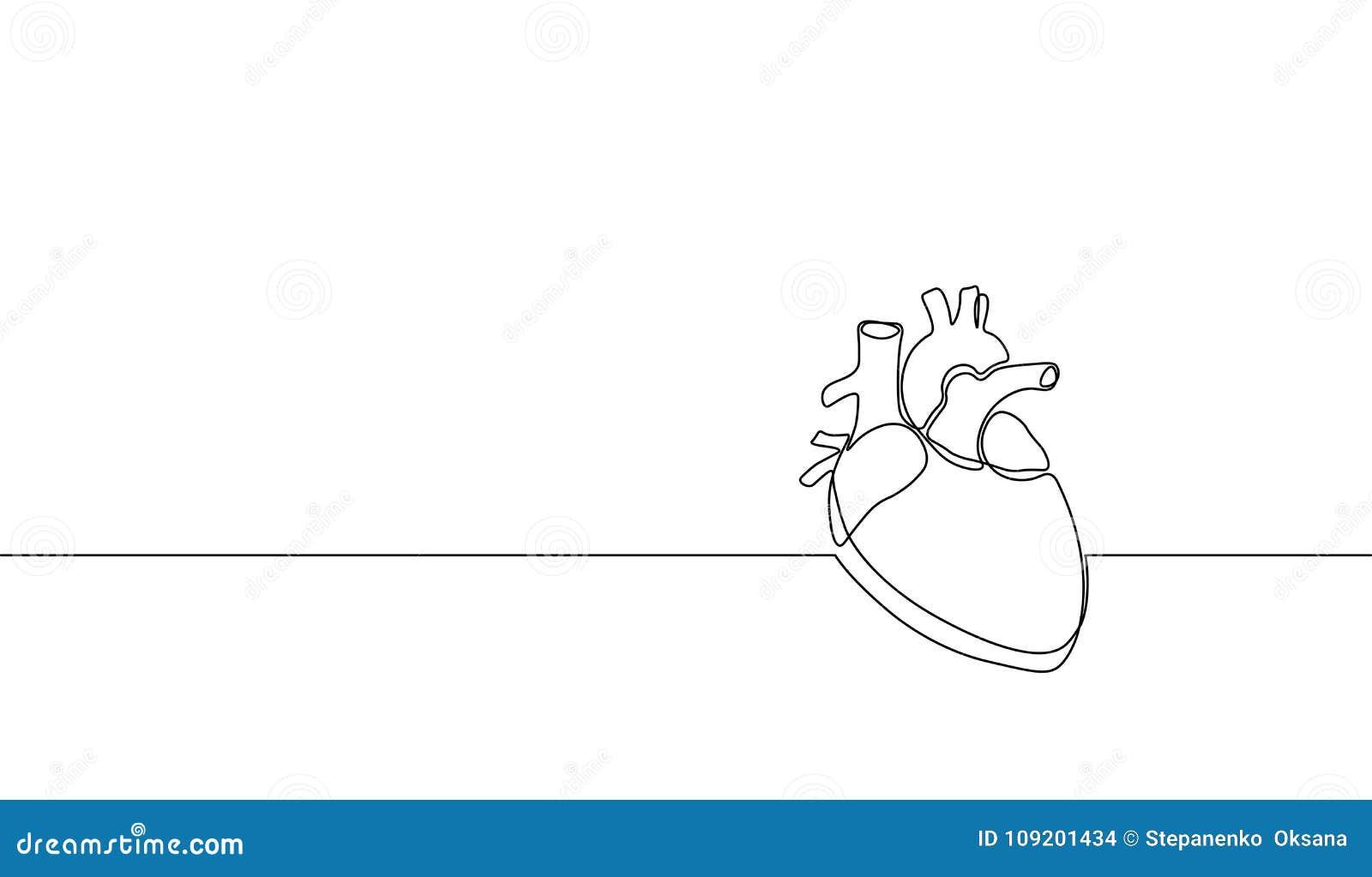 Encantador Anatomía Videos En Línea Imagen - Imágenes de Anatomía ...