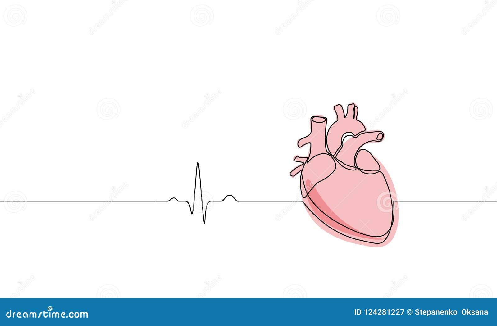Escoja La Línea Continua Silueta Humana Anatómica Del Corazón Del ...