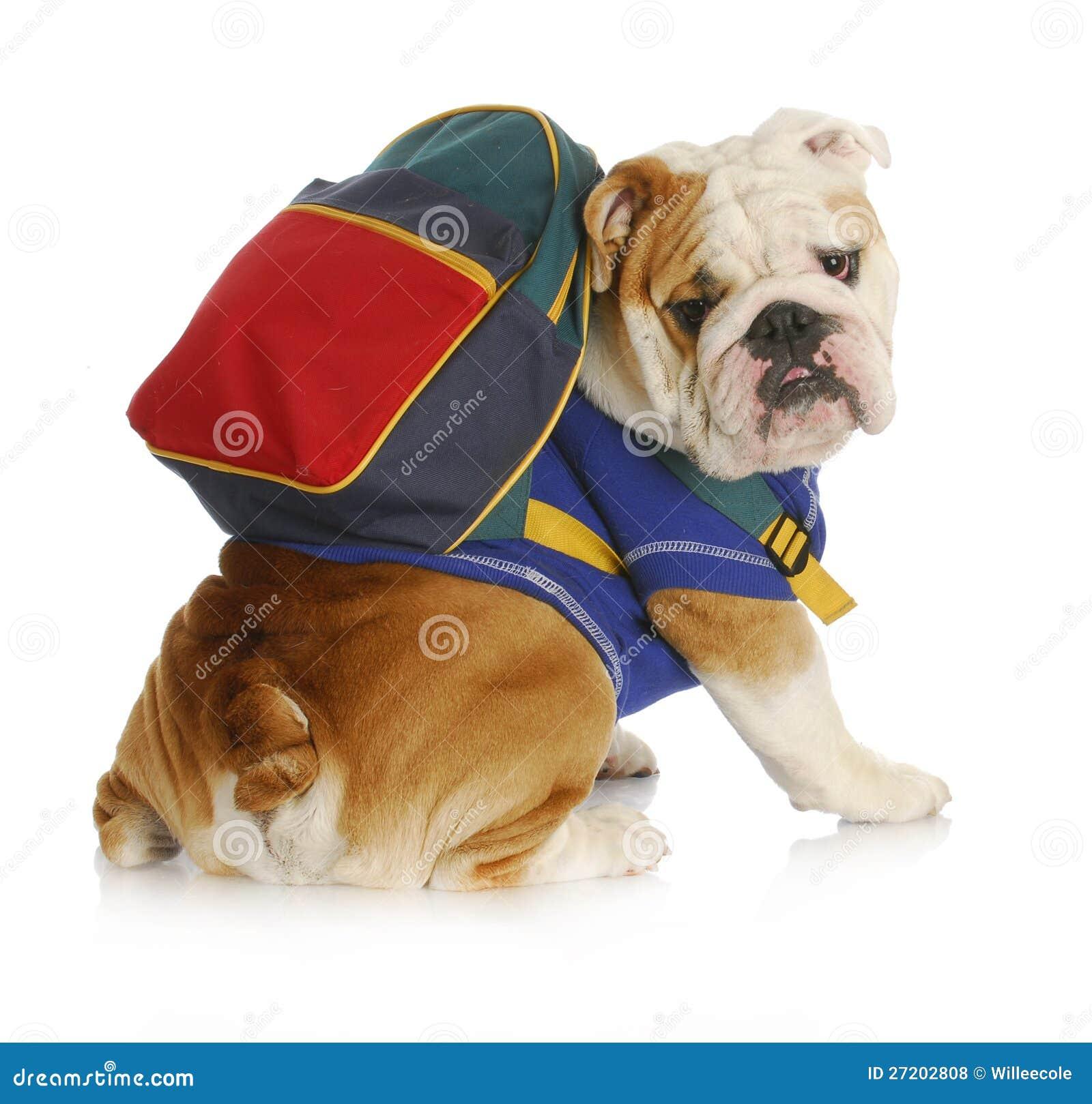 Escola da obediência do cão