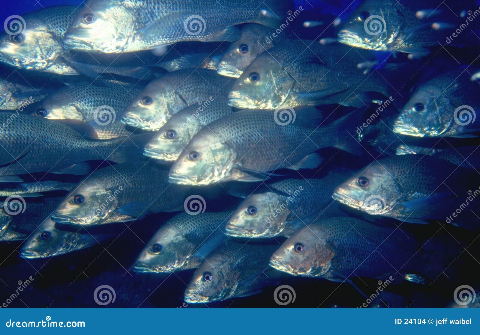 Escola dos peixes