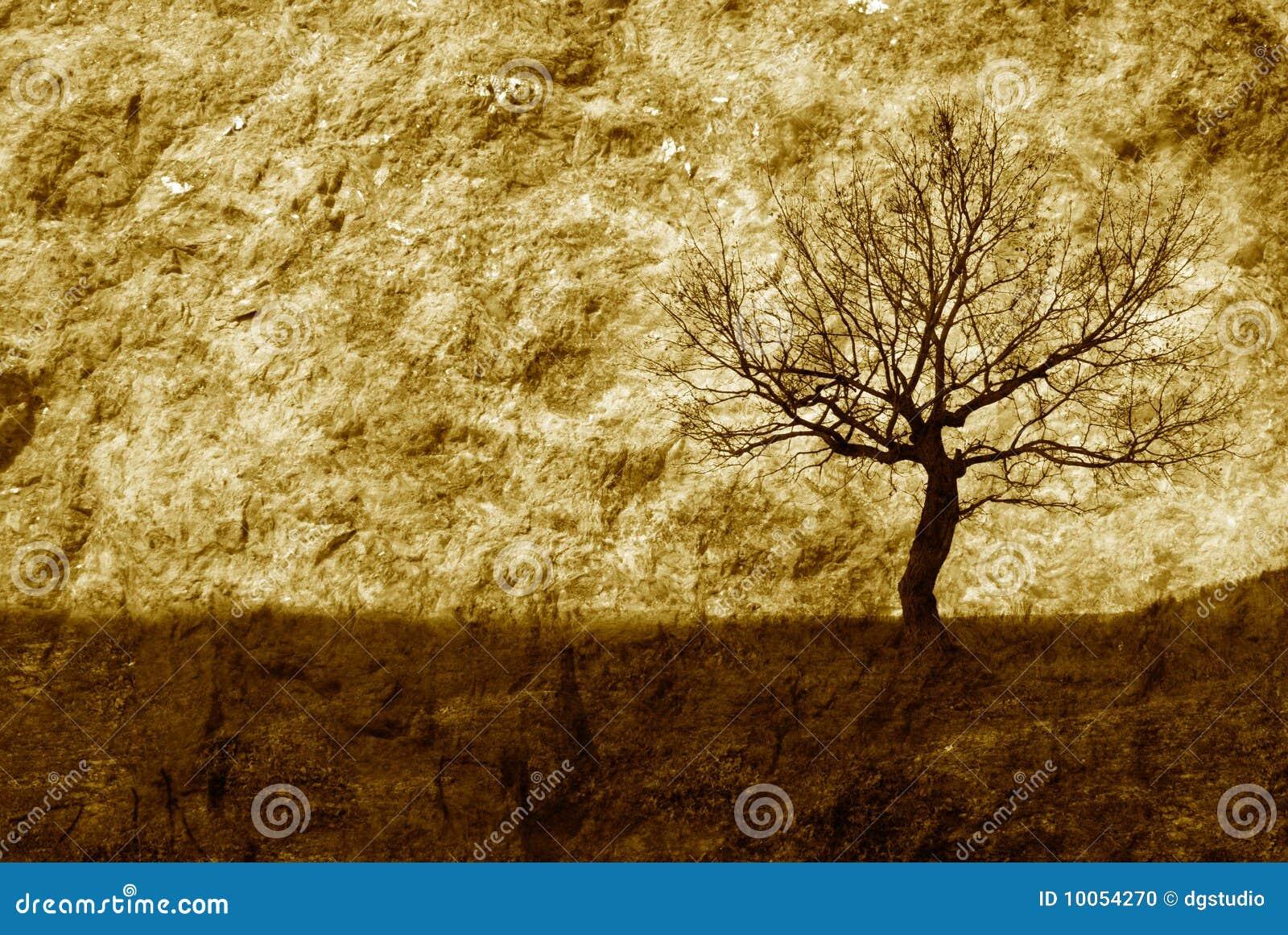 Escolha a árvore