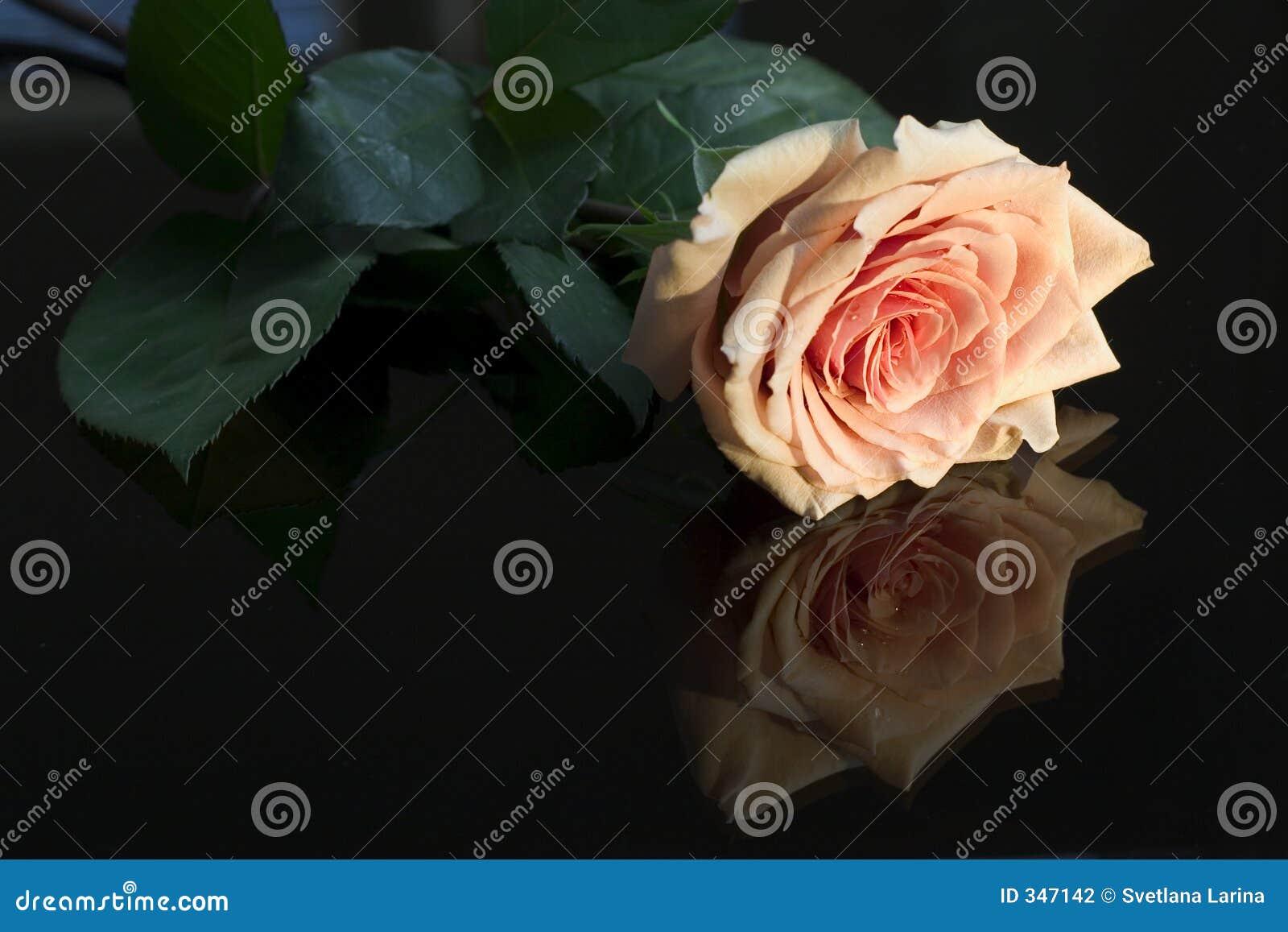 Escolha cor-de-rosa refletido