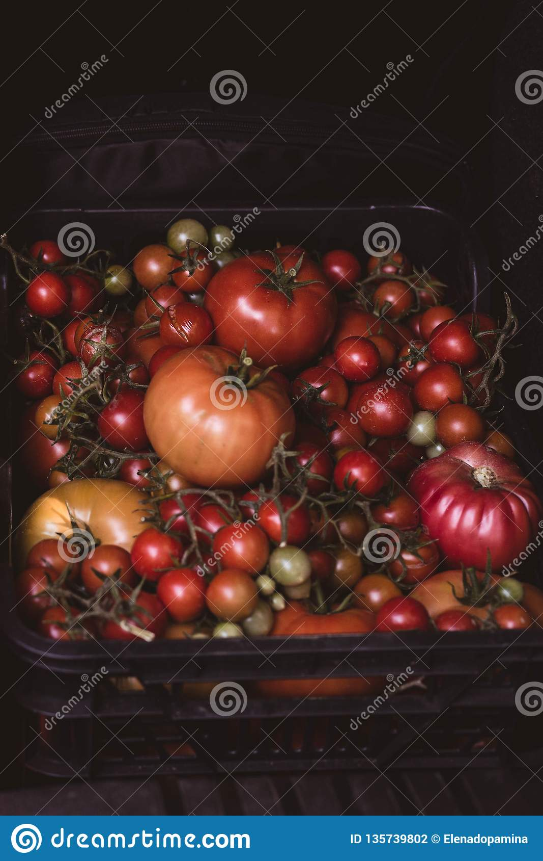 Escolheu recentemente os tomates enchidos em uma caixa