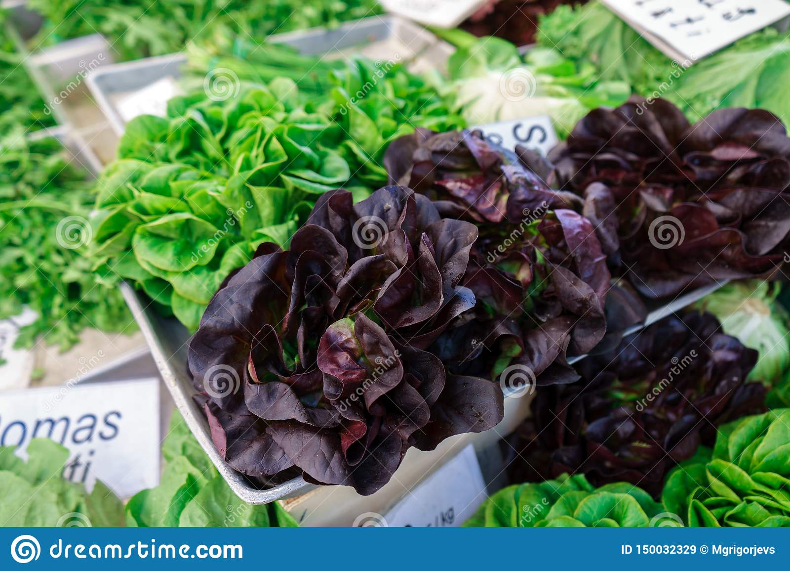 Escolheu recentemente variedades inteiras da alface no mercado do fazendeiro