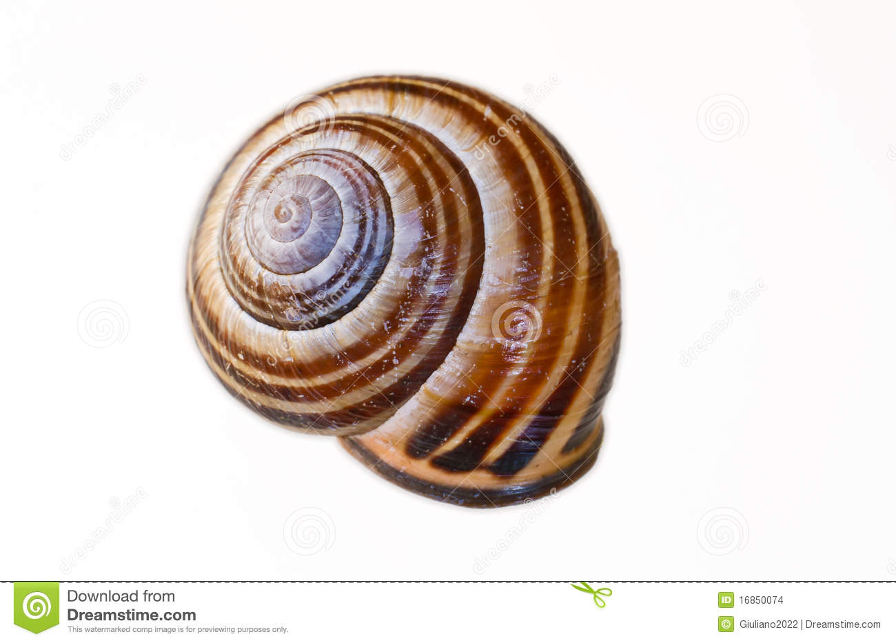 Escudo do caracol