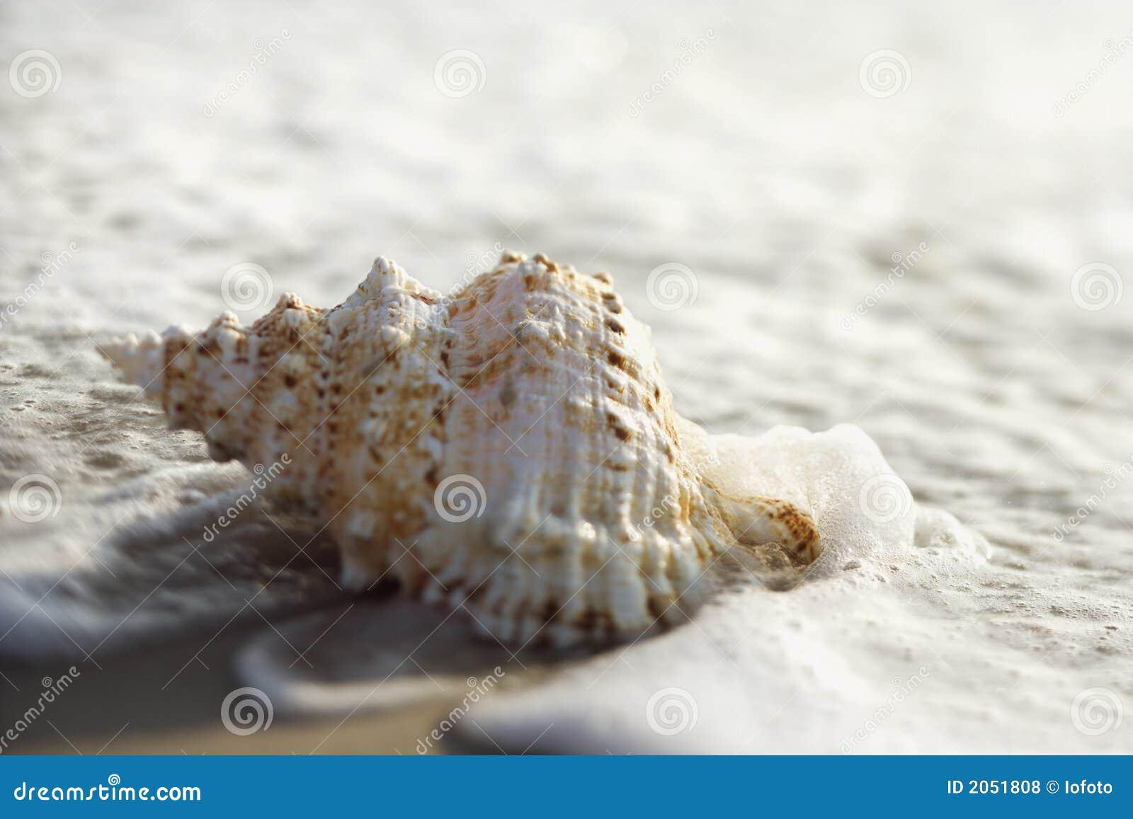 Escudo do Conch nas ondas.
