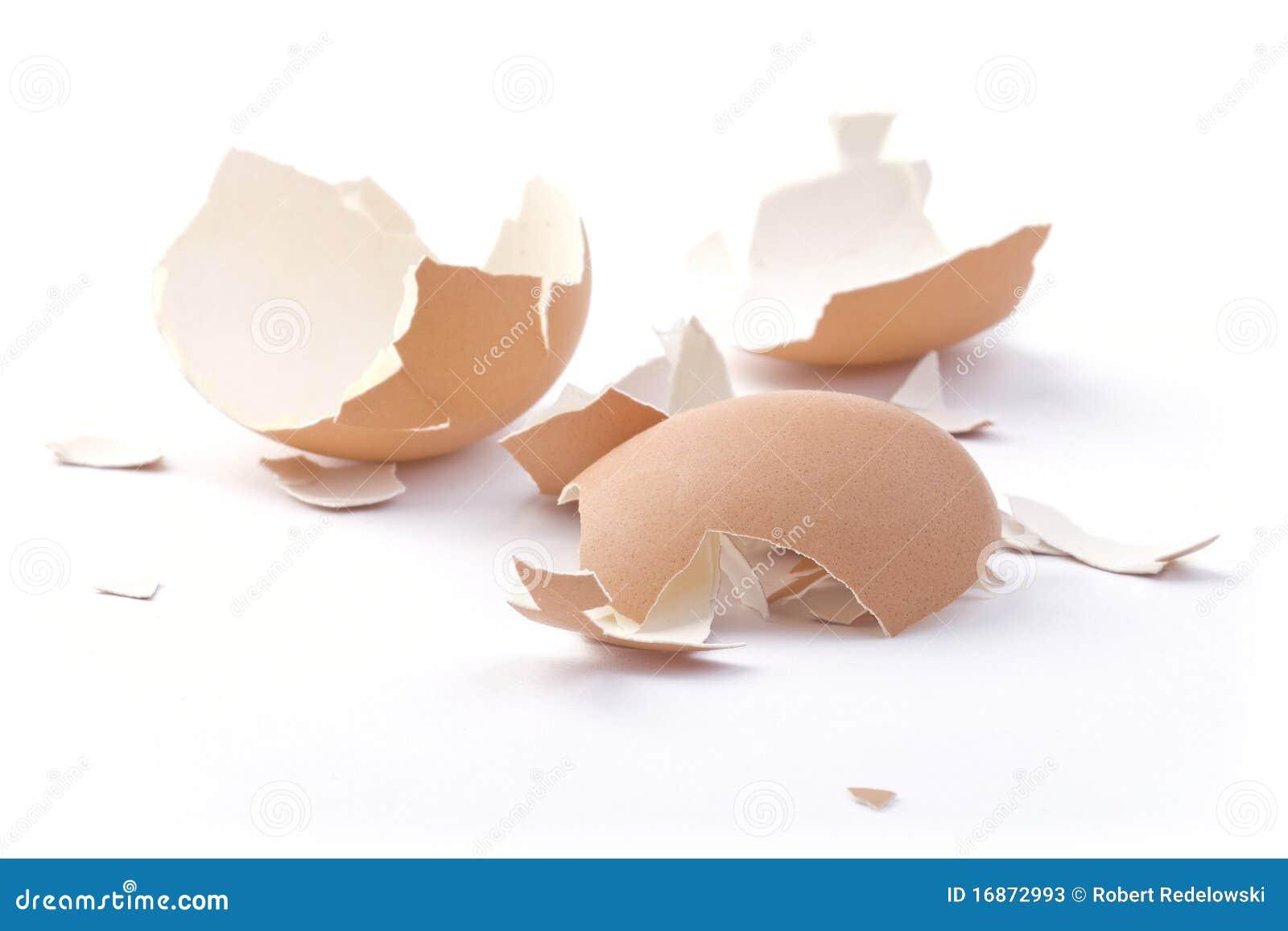 Escudo do ovo.
