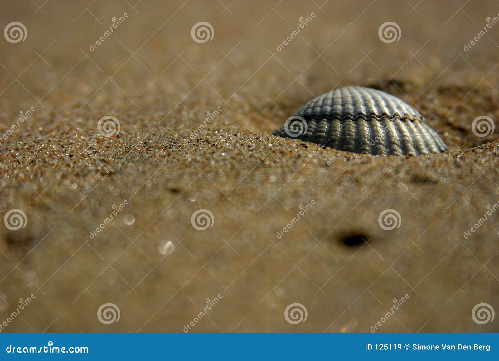 Escudo na praia