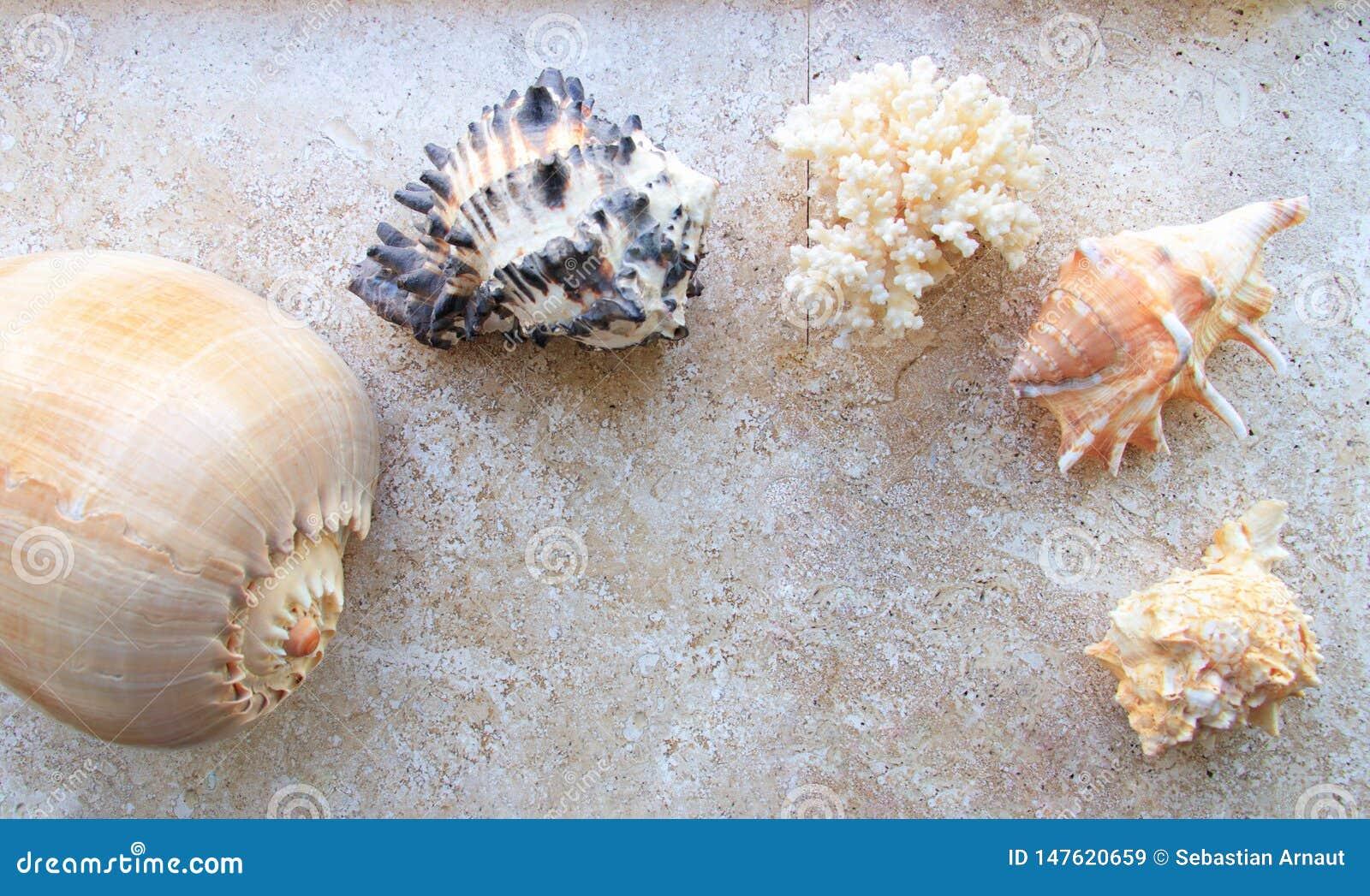 Escudos bonitos do mar e uma estrela de mar