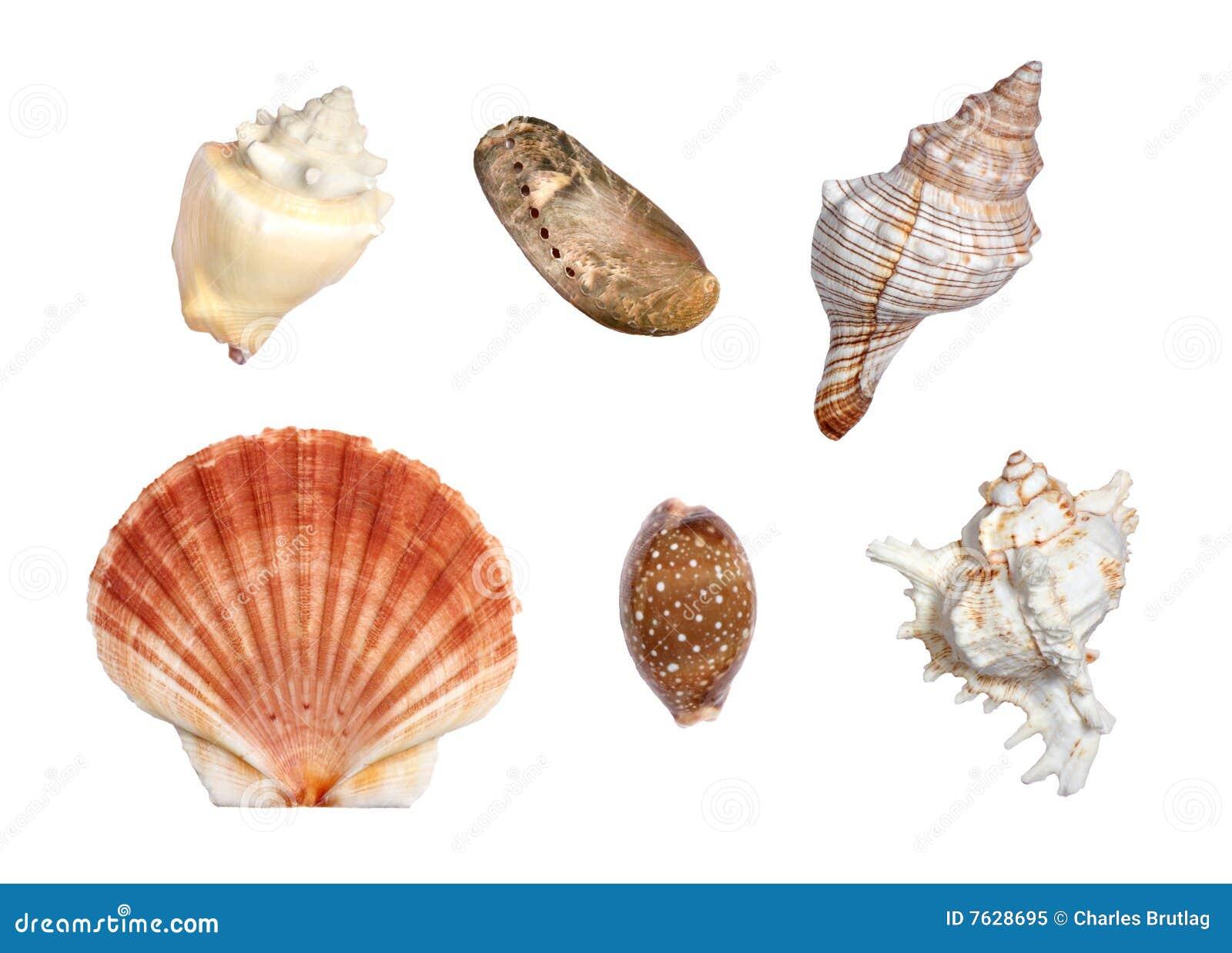 Escudos do mar