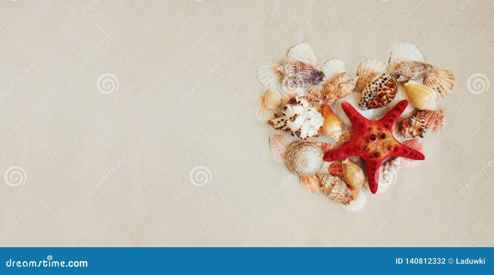 Escudos do mar e peixes vermelhos da estrela no Sandy Beach com espaço da cópia para o texto