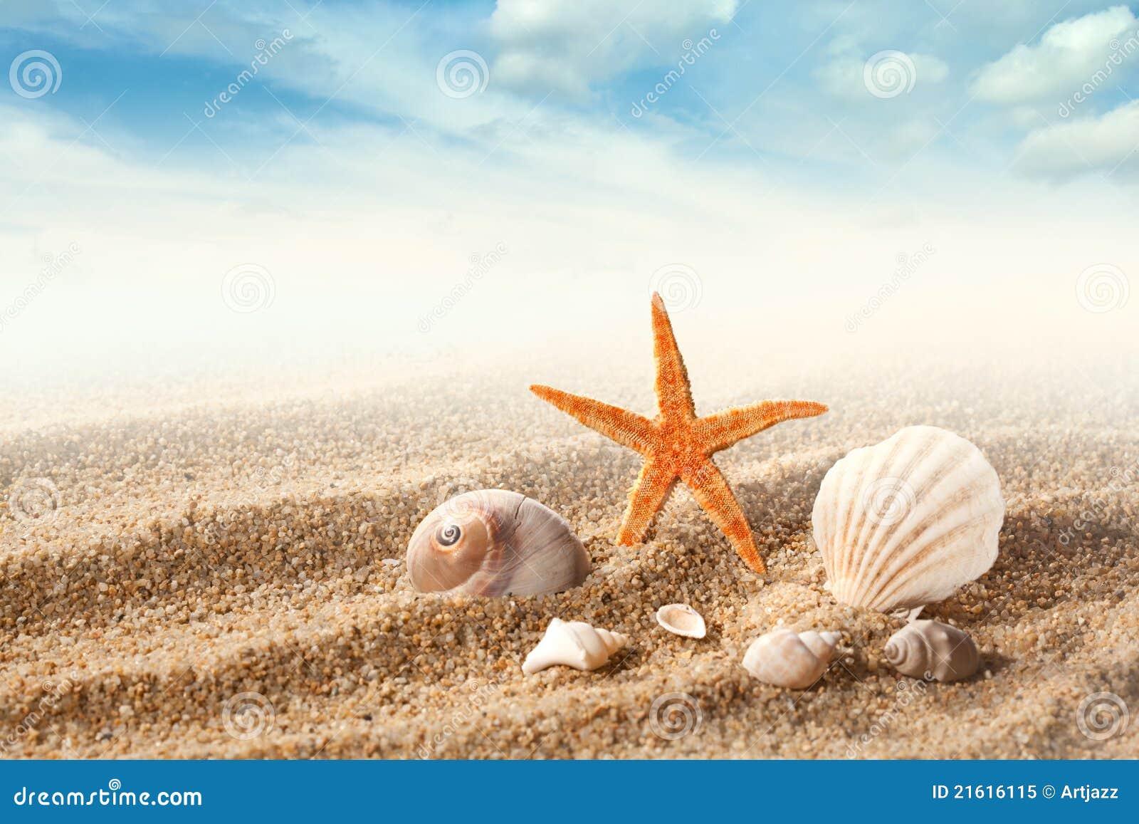 Escudos do mar na areia