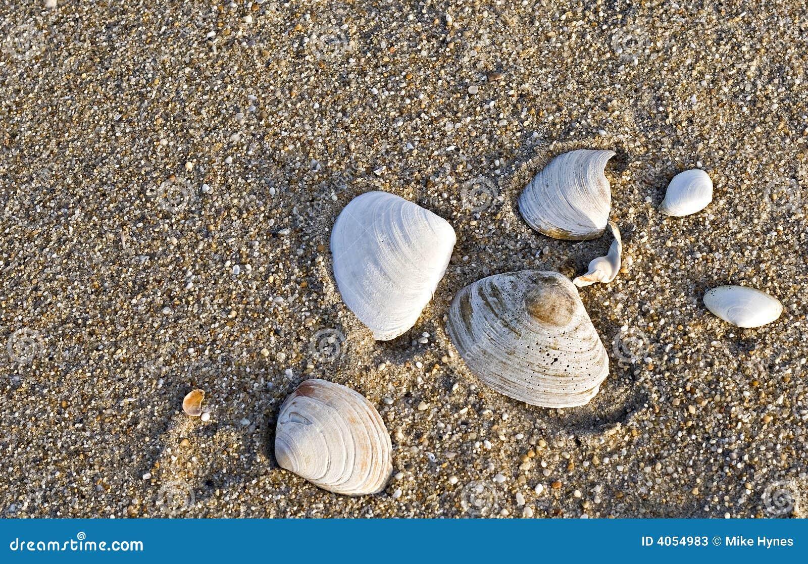 Escudos do mar na praia
