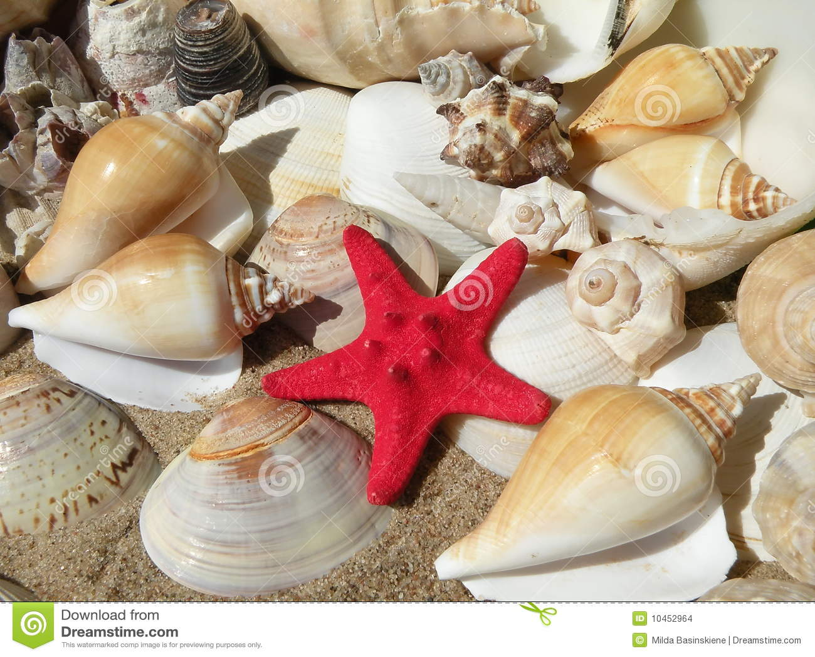 Escudos e estrela de mar