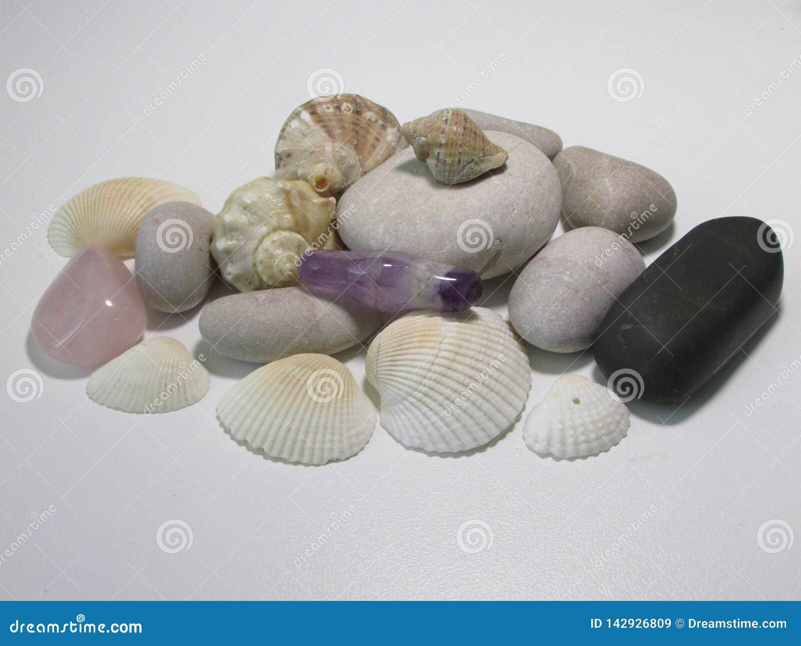 Escudos e pedras do mar