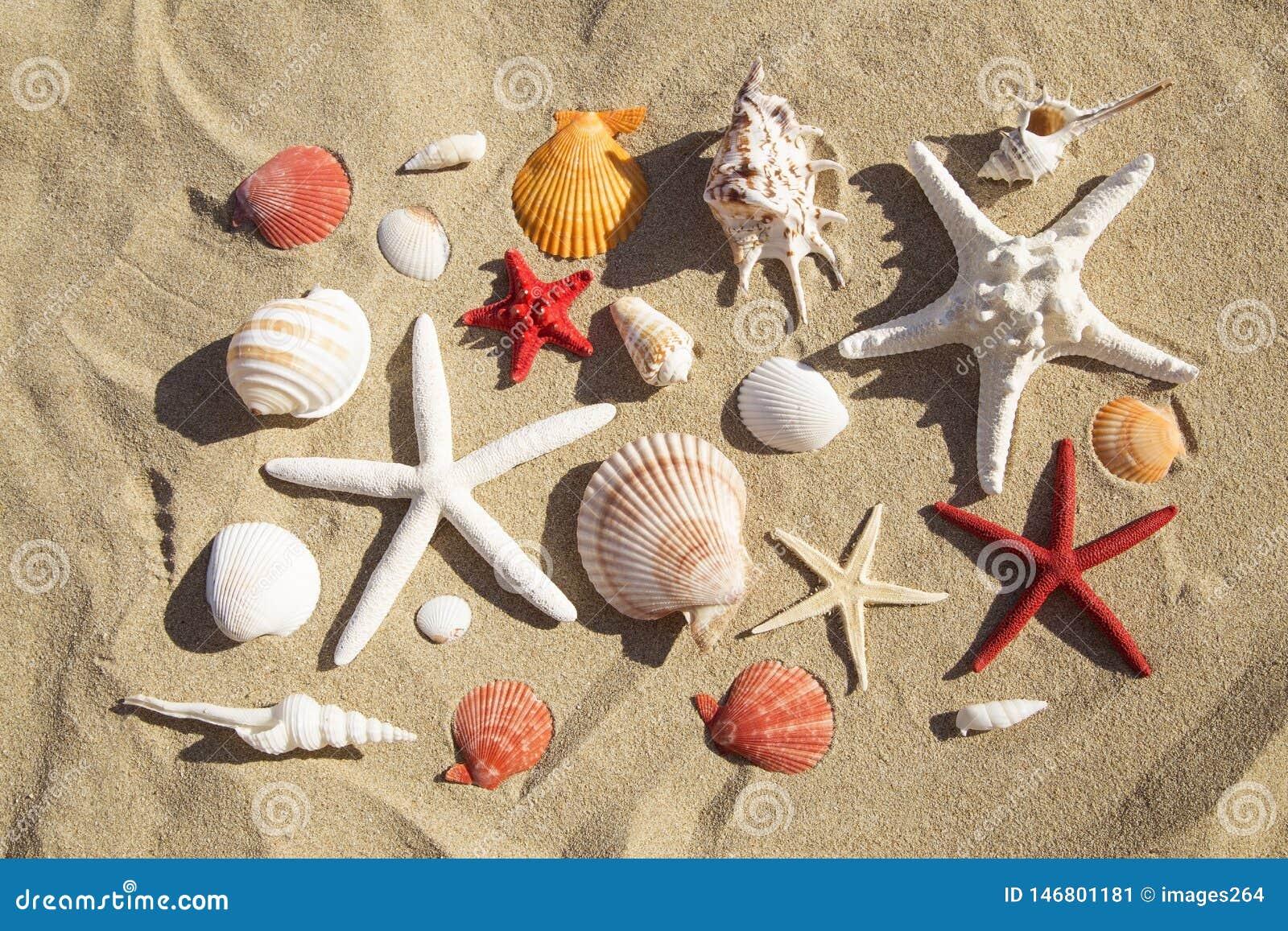 Escudos e starfish do mar