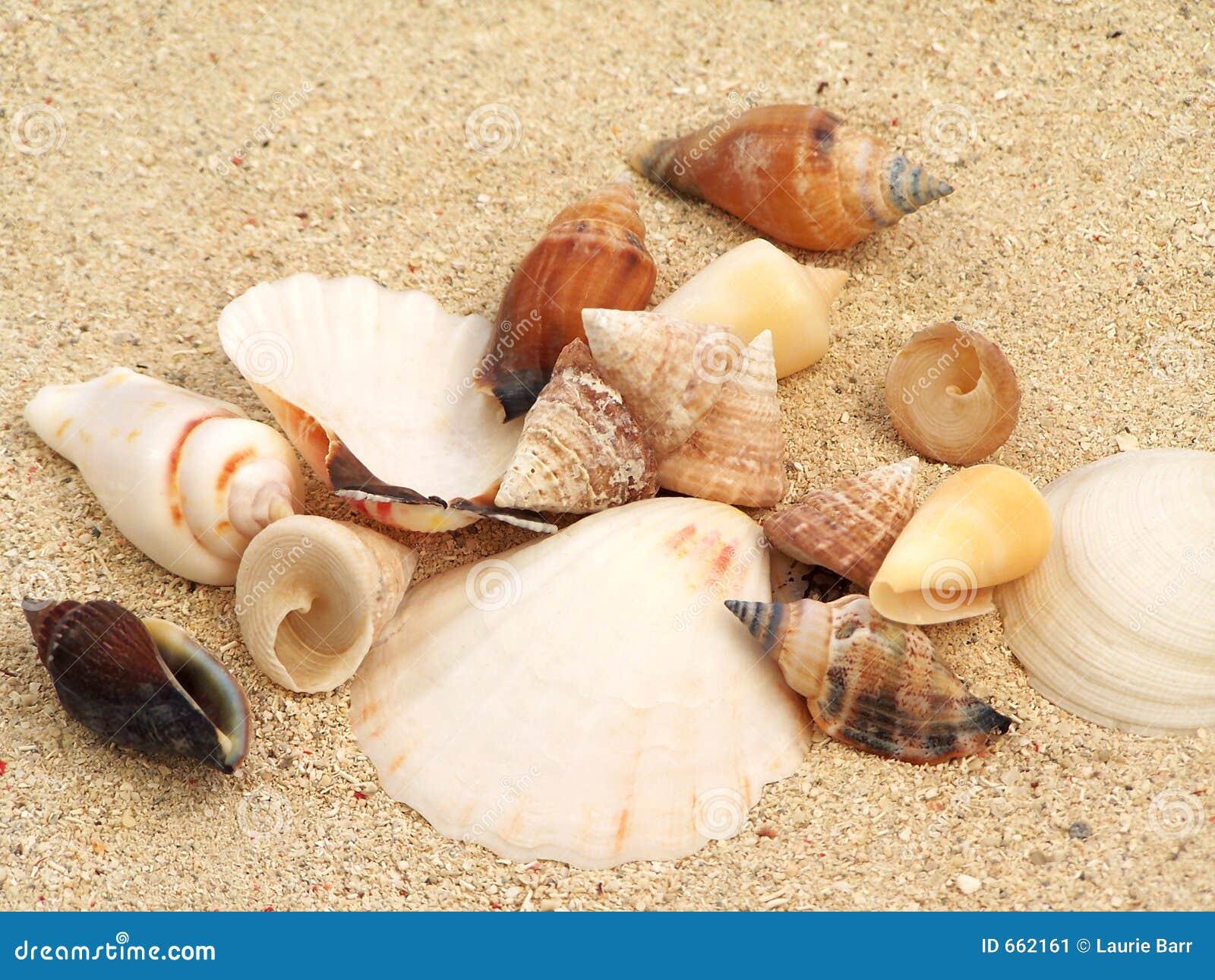 Escudos na areia