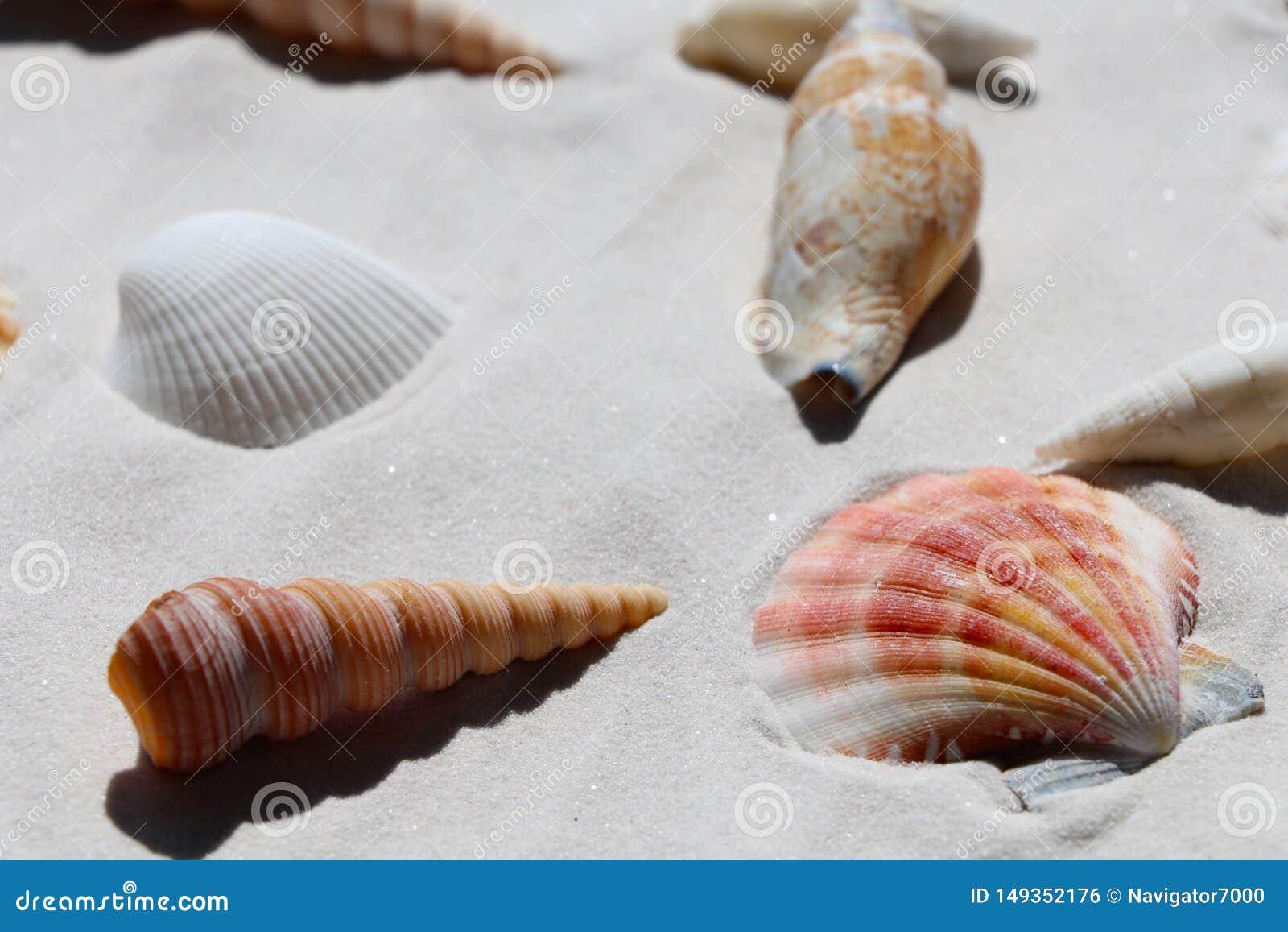 Escudos na areia branca, vista superior